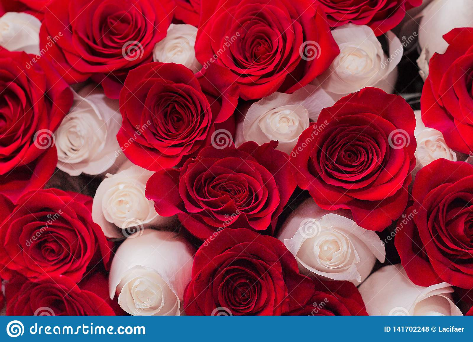 Fundo de rosas vermelhas e brancas