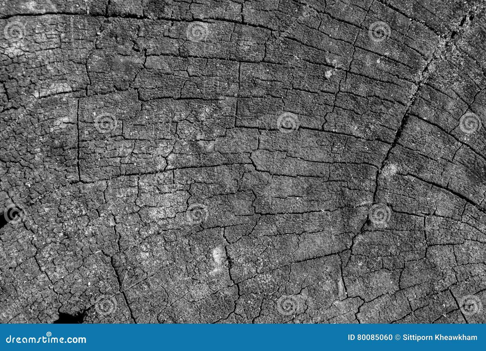 Fundo de superfície marcado da textura do tronco de árvore