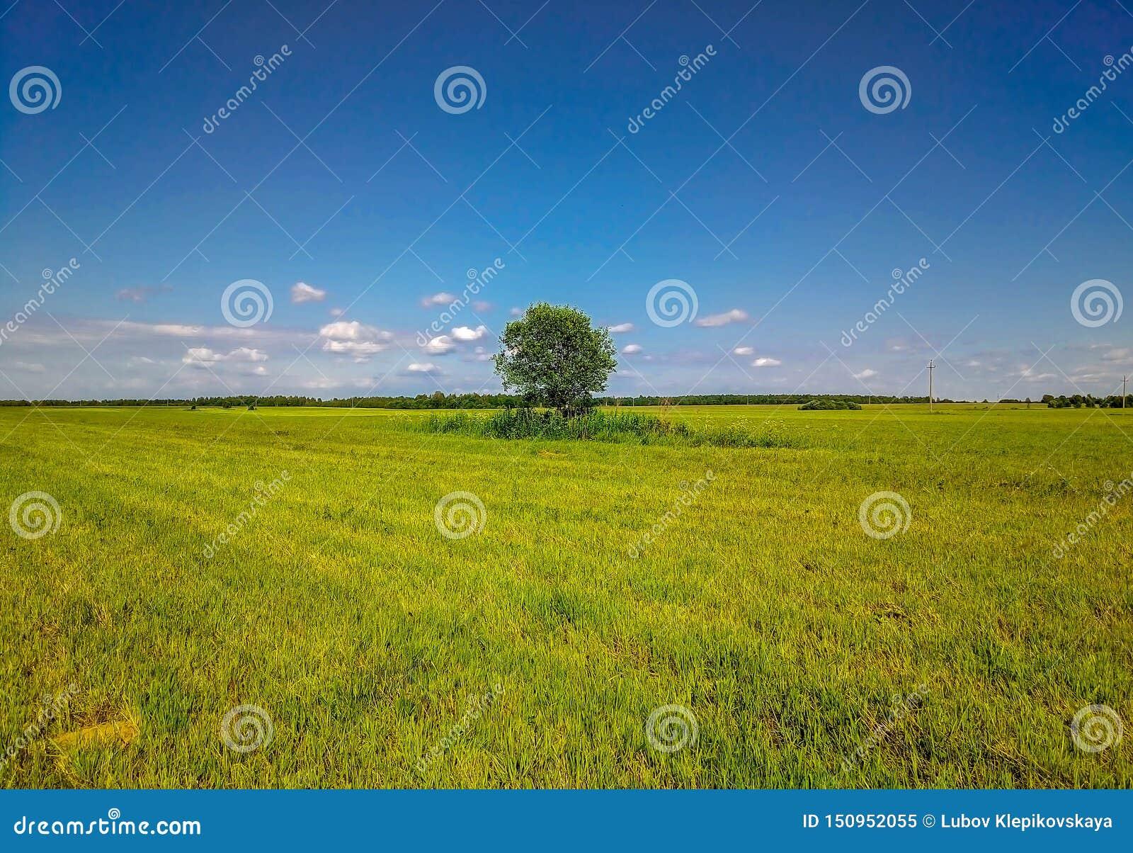 Fundo do céu azul e de grama chanfrada