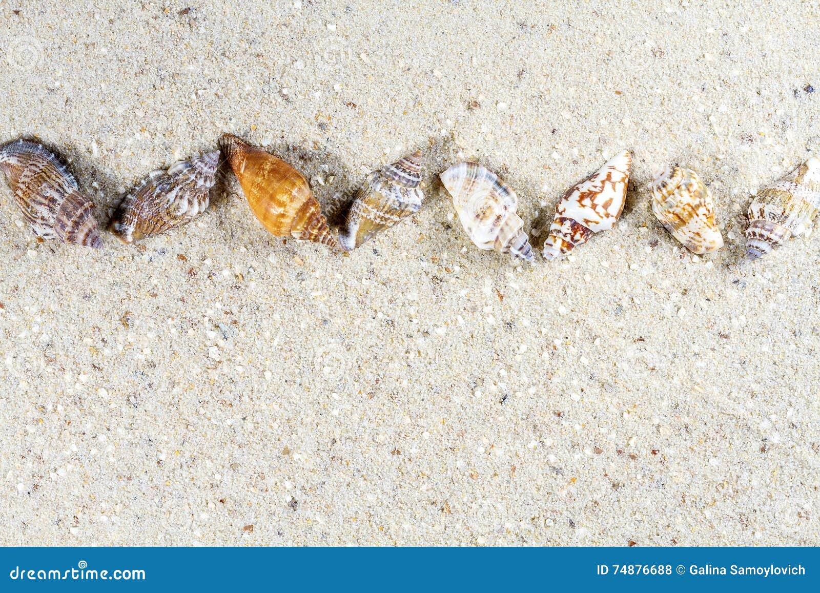 Fundo do curso com areia e shell