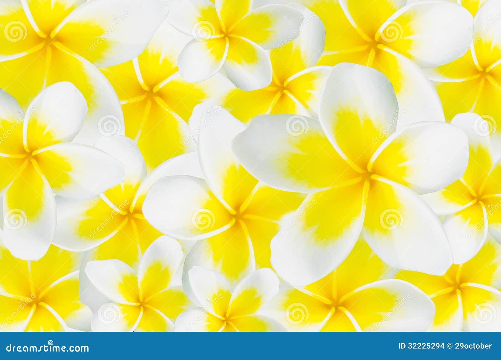 Download Fundo Do Frangipani, Plumeria, Templetree Foto de Stock - Imagem de cresça, macio: 32225294
