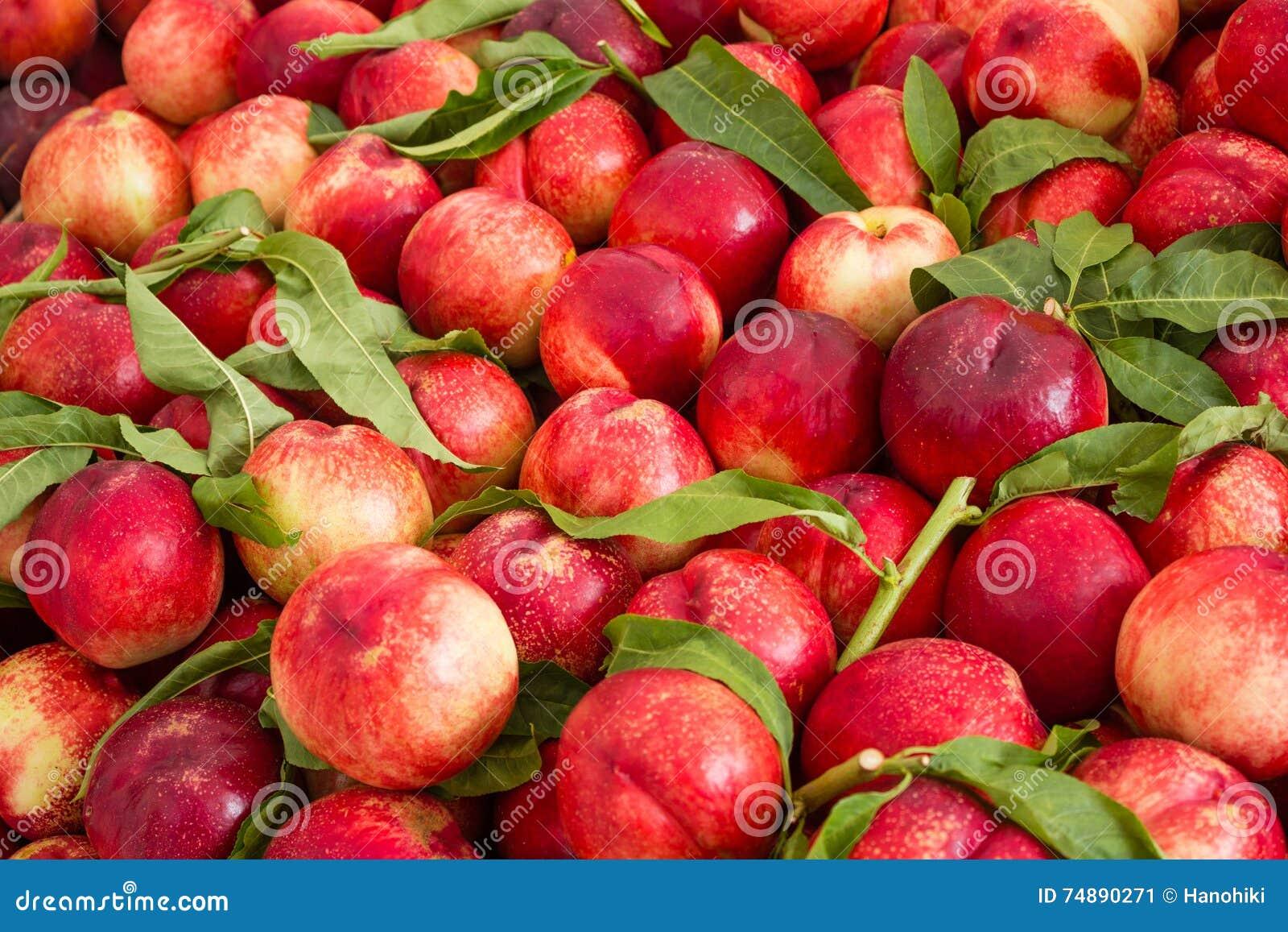 Fundo do fruto, nectarina/fruto dos pêssegos