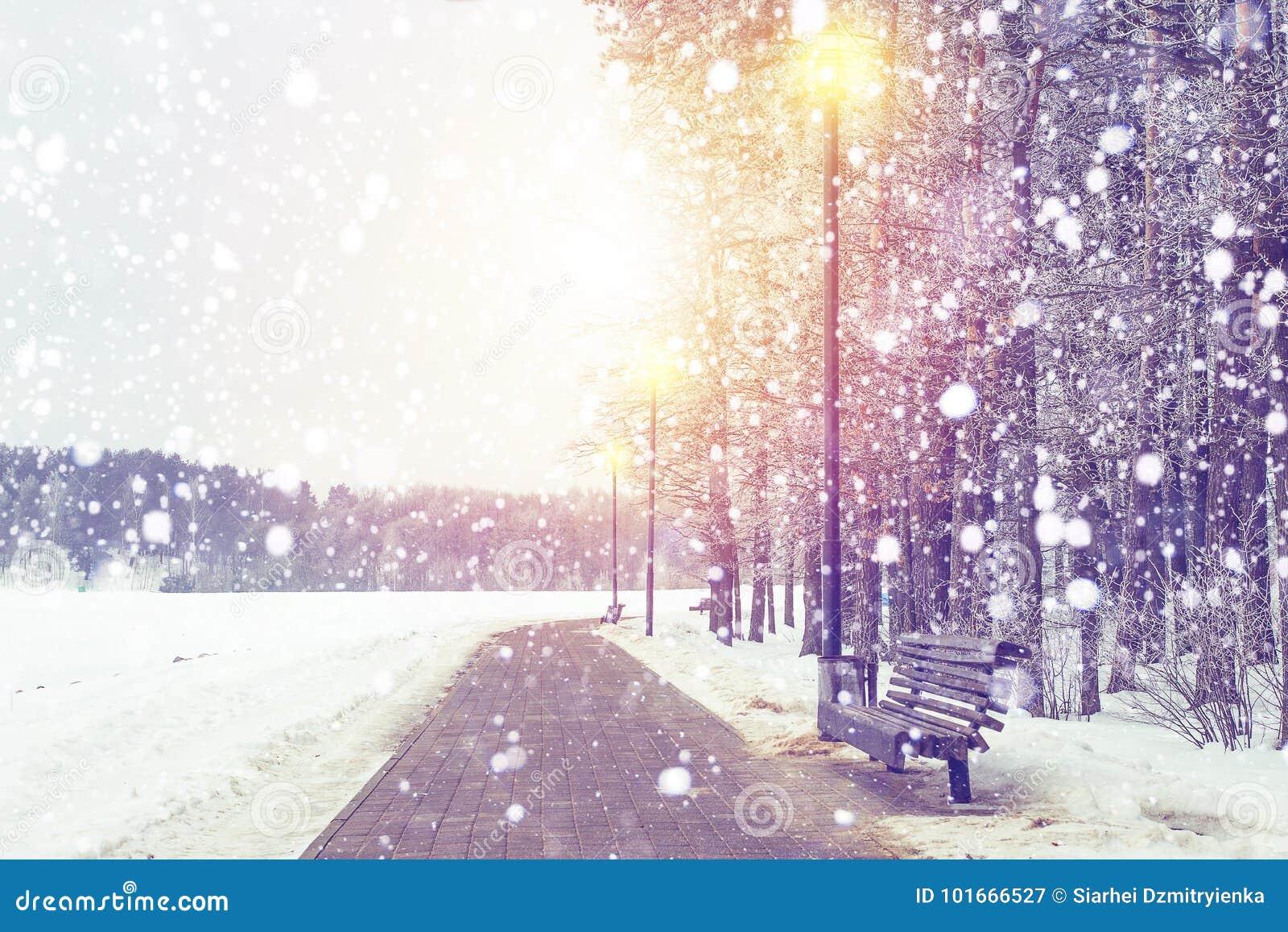 Fundo do inverno Queda de neve no parque do Xmas no por do sol Flocos de neve que faling no tema do Natal nevado da floresta e do