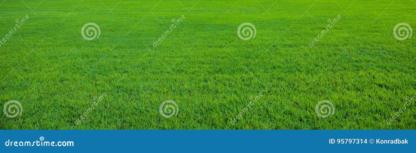 Fundo do teste padrão bonito da grama verde