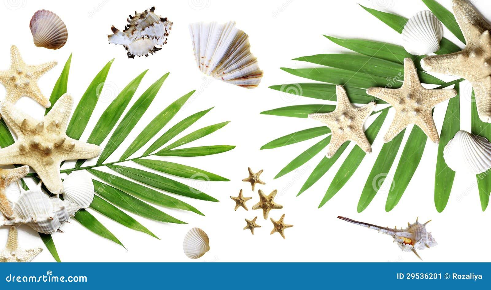 Fundo do verão com palmas e os seashells tropicais