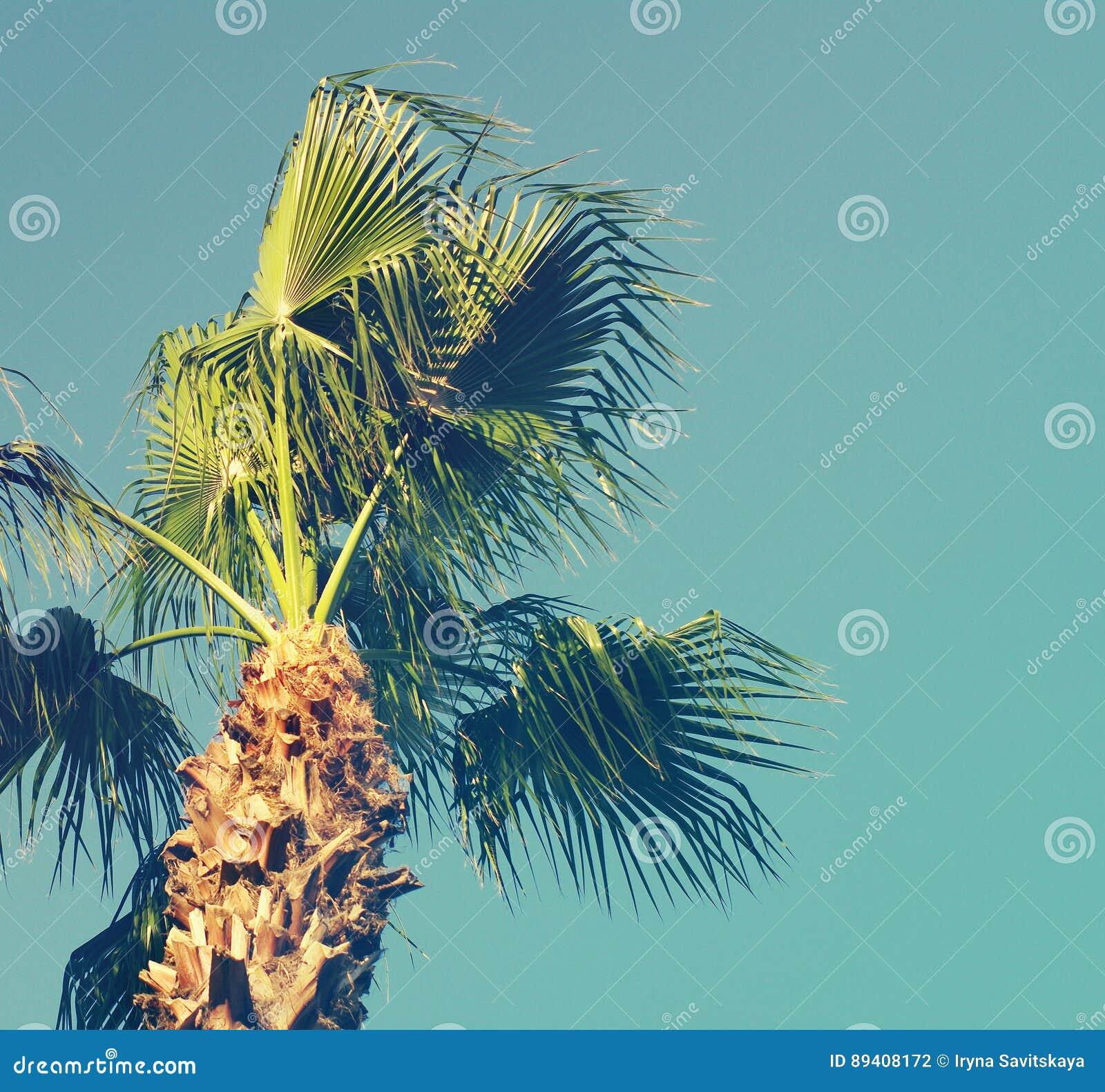 Fundo do verão com a palmeira contra o céu