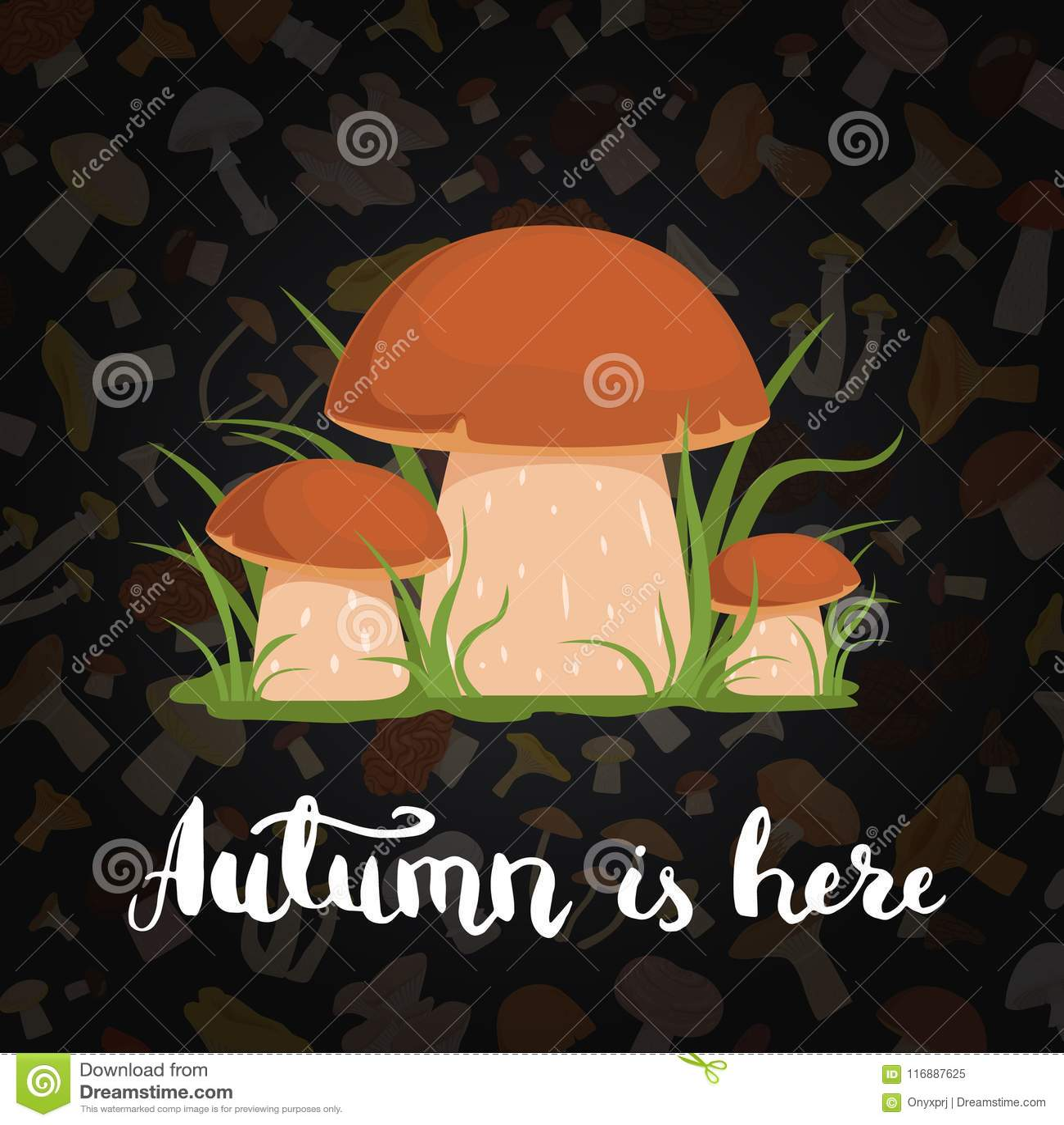 Fundo do vetor com cogumelos e rotulação dos desenhos animados