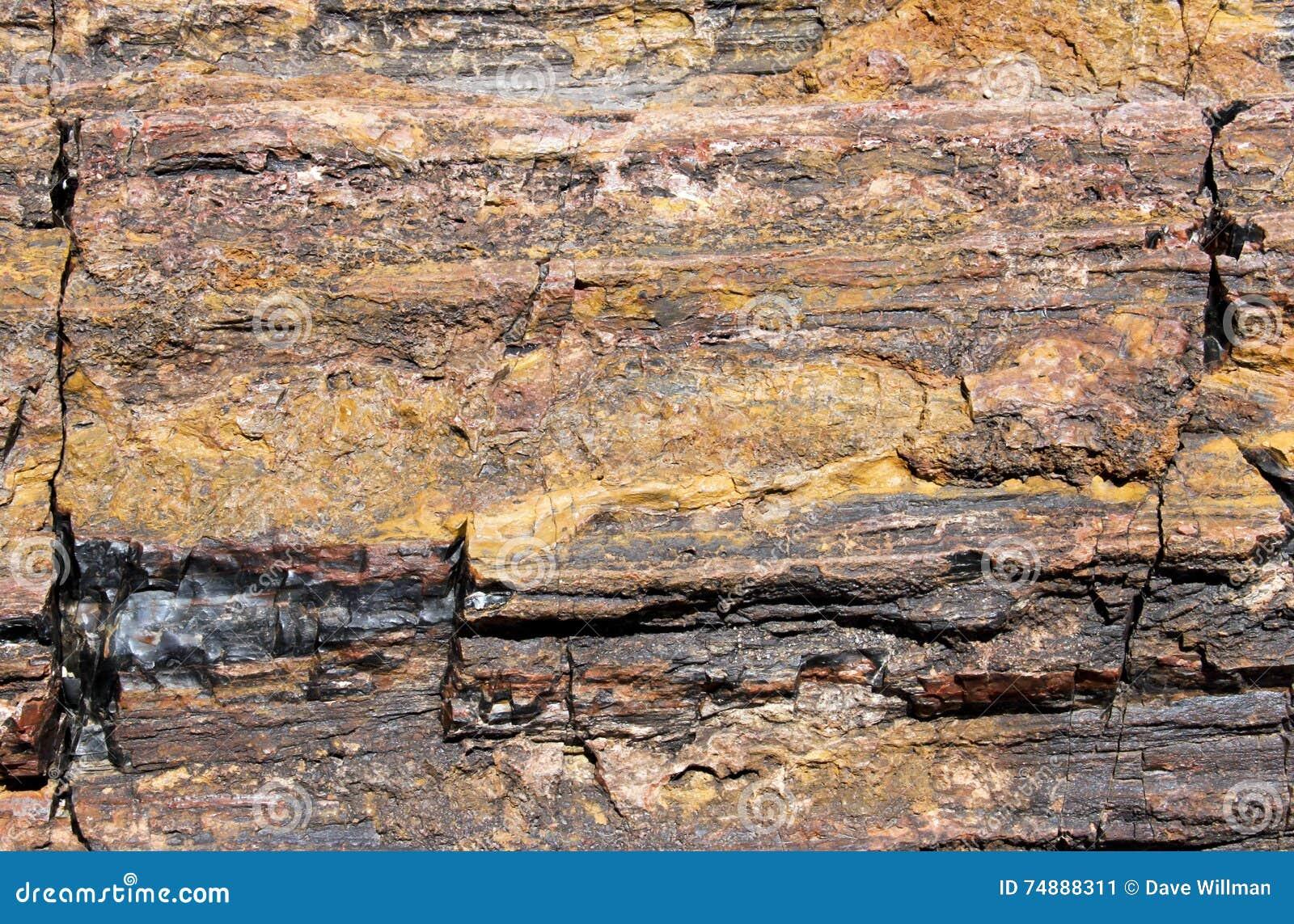 Fundo fóssil de madeira hirto de medo