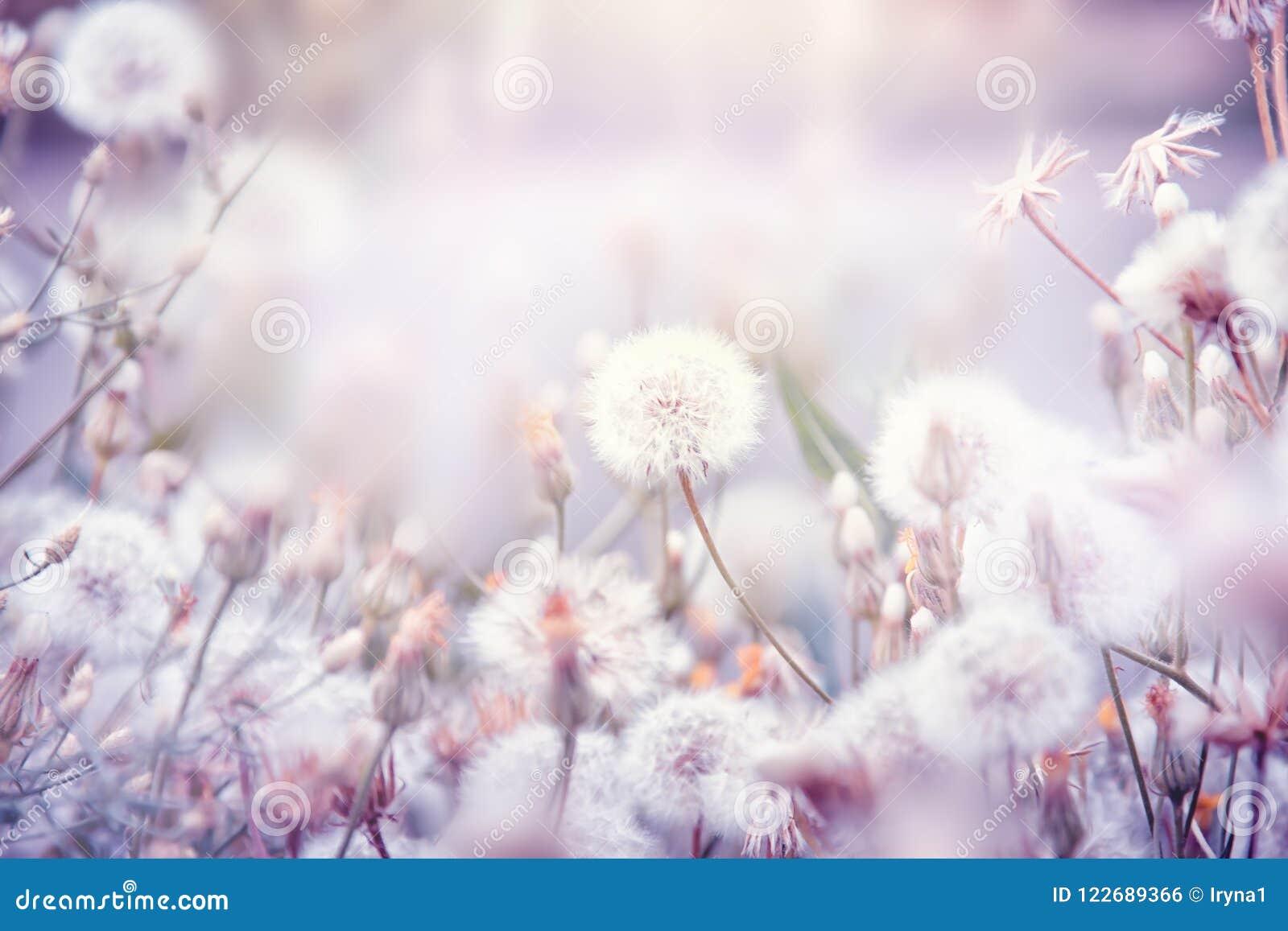 Fundo floral bonito com flores do dente-de-leão