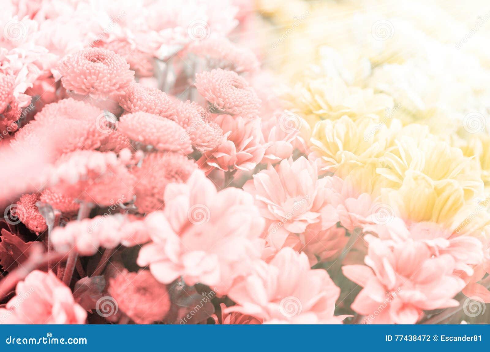 Fundo floral surpreendente com raios do sol