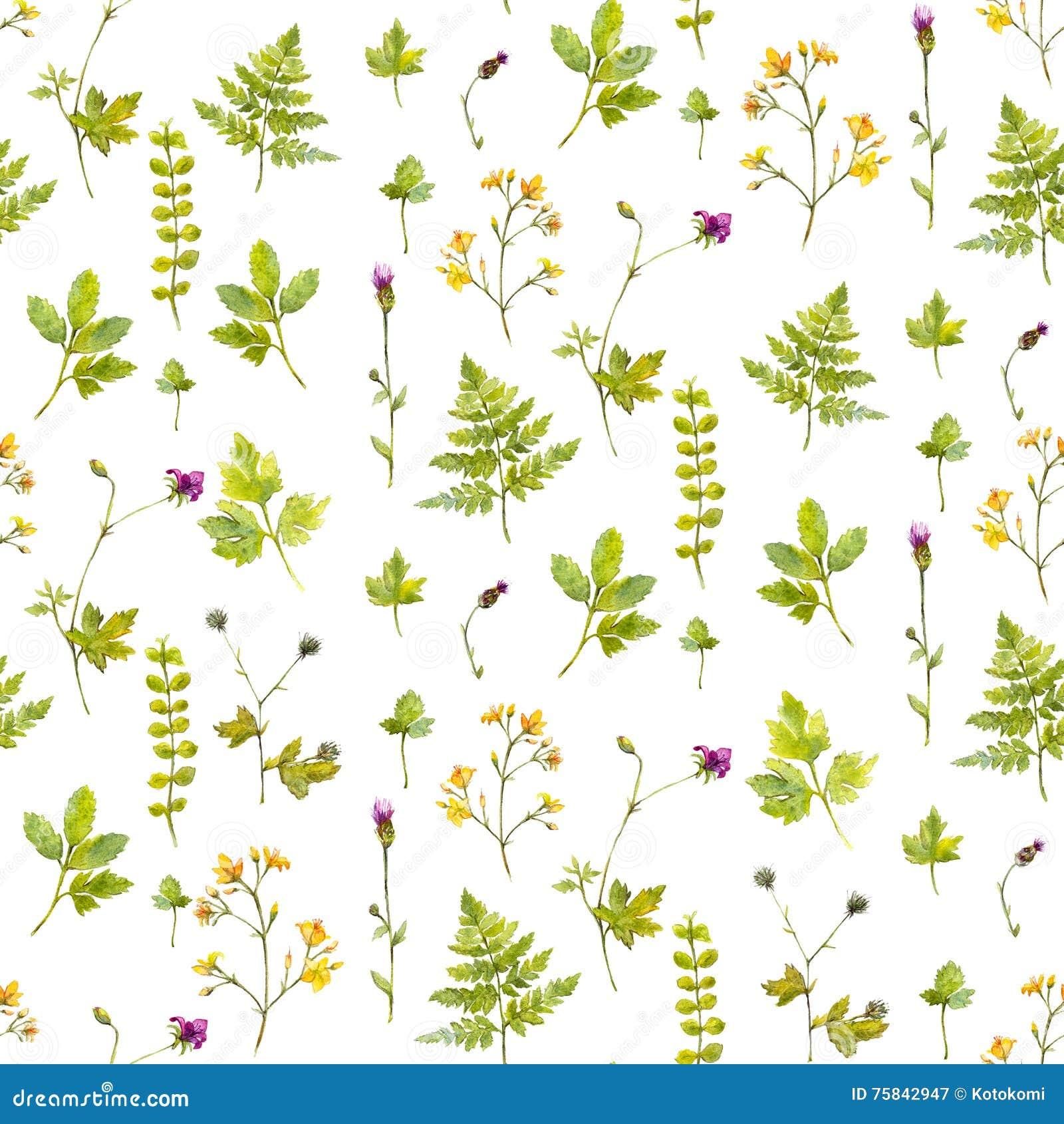 Fundo natural com flores selvagens, plantas e folhas da samambaia Teste padrão sem emenda botânico da aquarela com pintado à mão