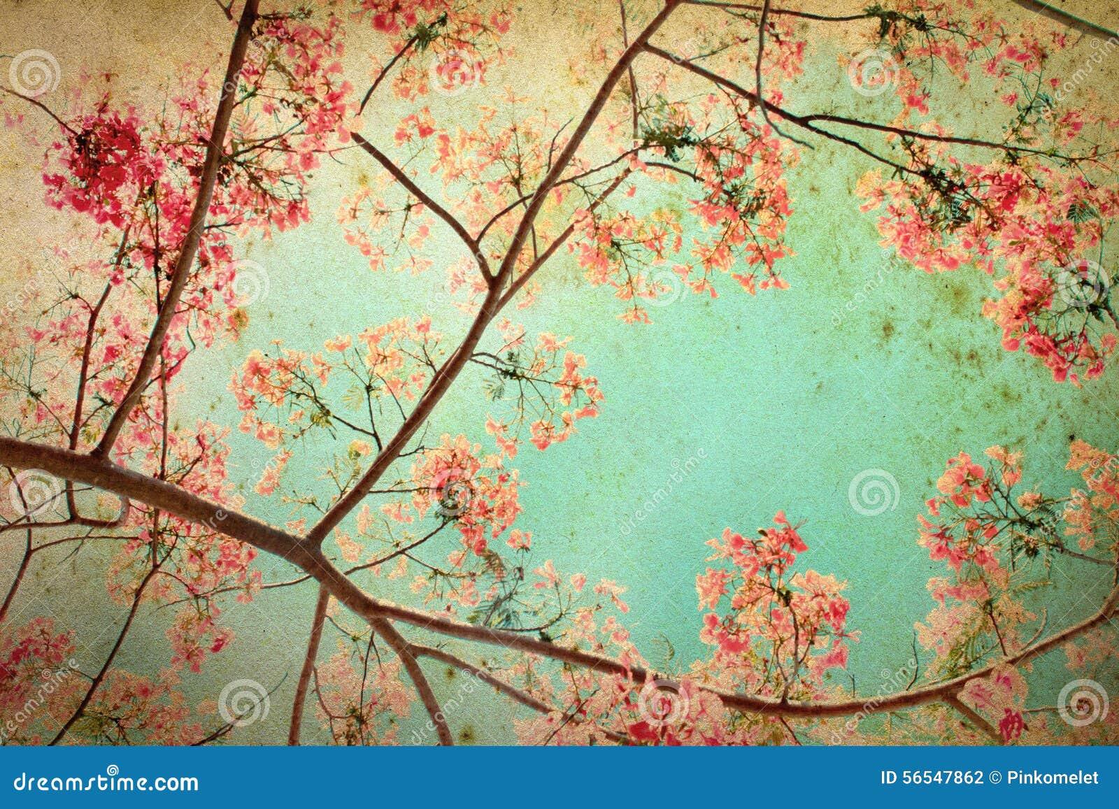 Fundo retro abstrato das flores Flam-boyant ou de pavão