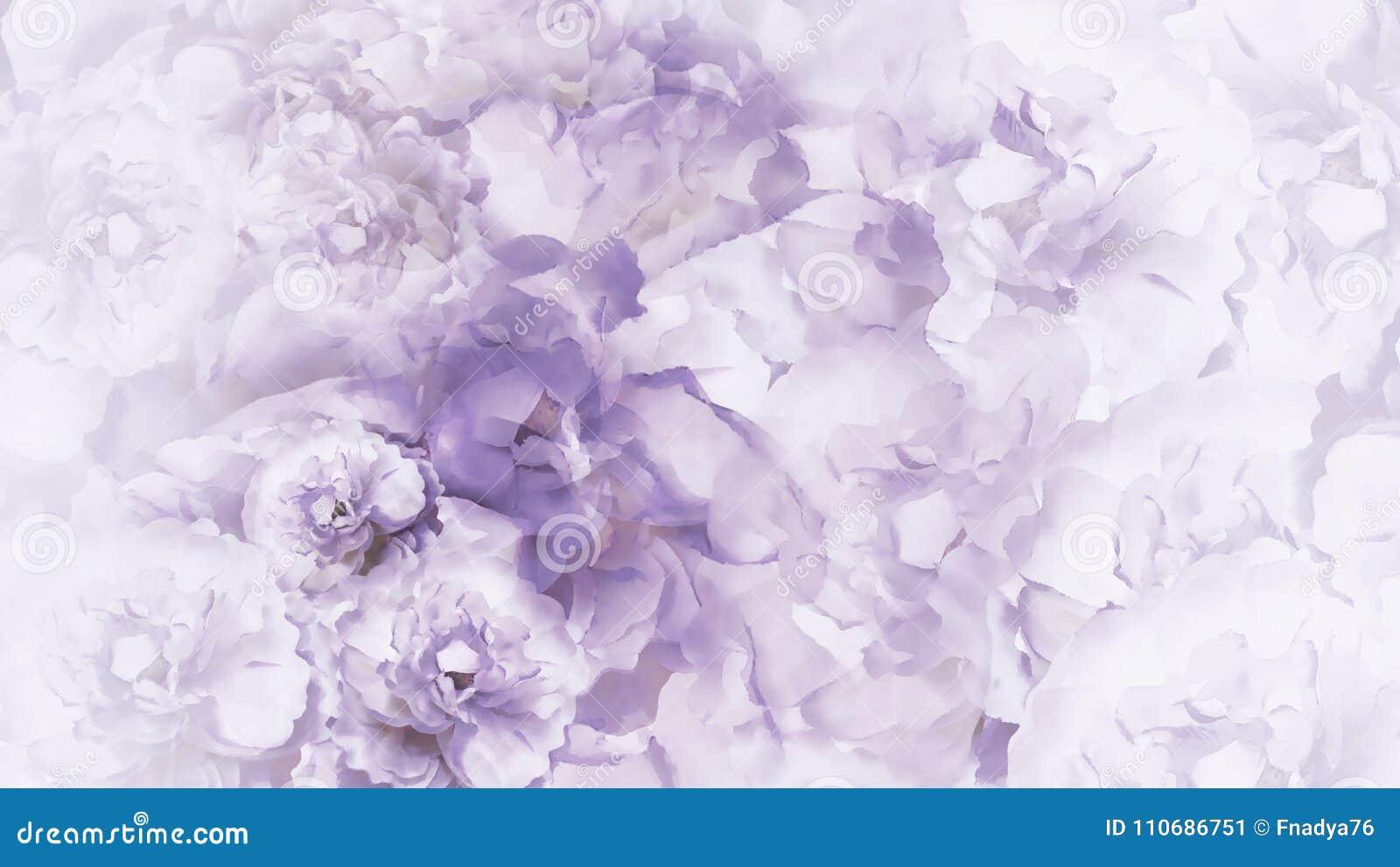 Fundo roxo-branco floral o vintage Roxo-branco floresce peônias colagem floral Composição da flor