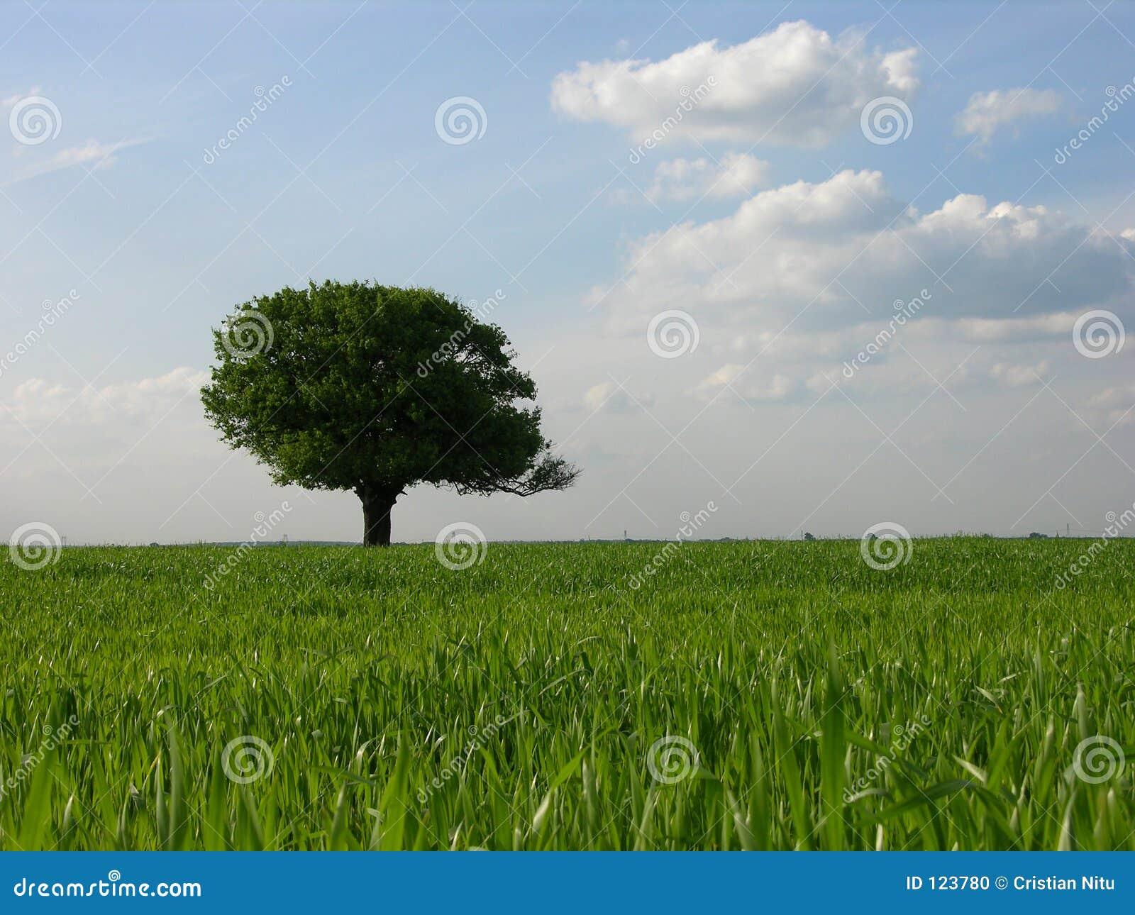 Fundo só da árvore