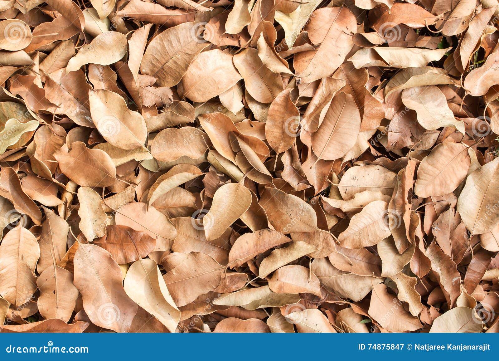 Fundo seco da folha