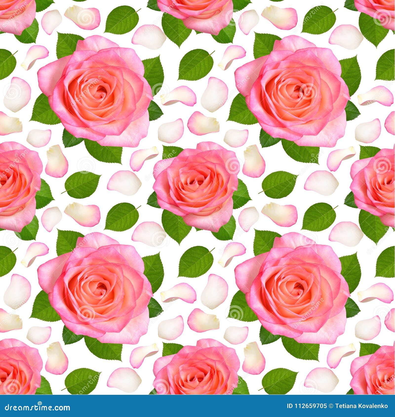 Fundo sem emenda com rosas e as pétalas cor-de-rosa