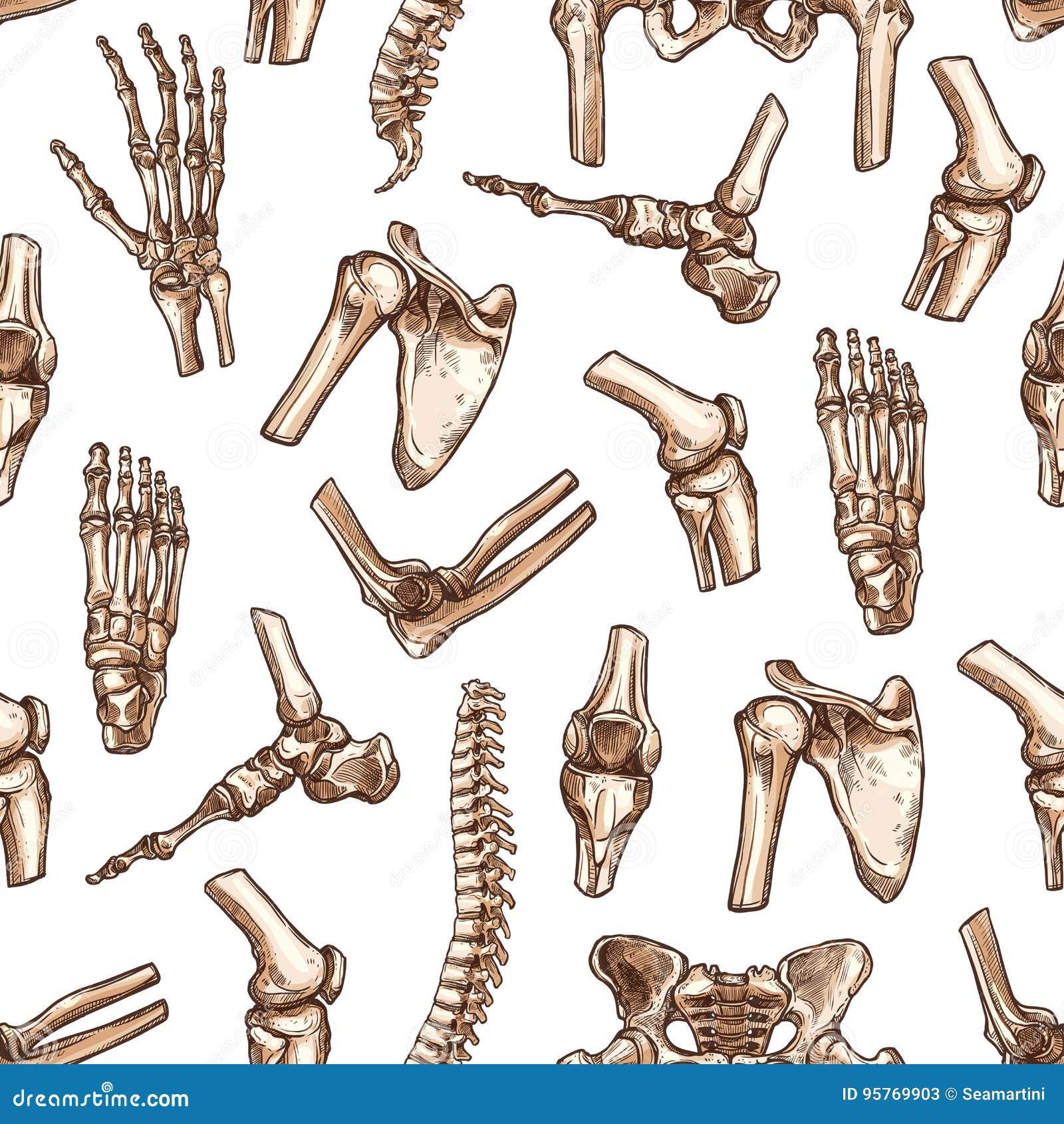 Fundo sem emenda do teste padrão do osso de esqueleto humano