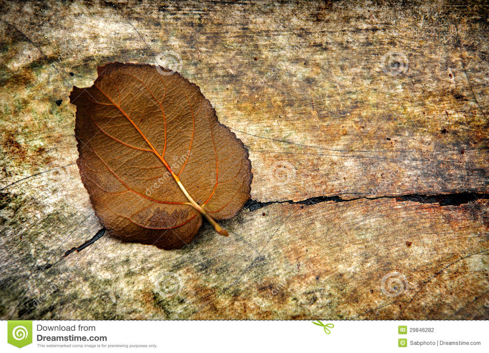 Fundo do Grunge com uma folha