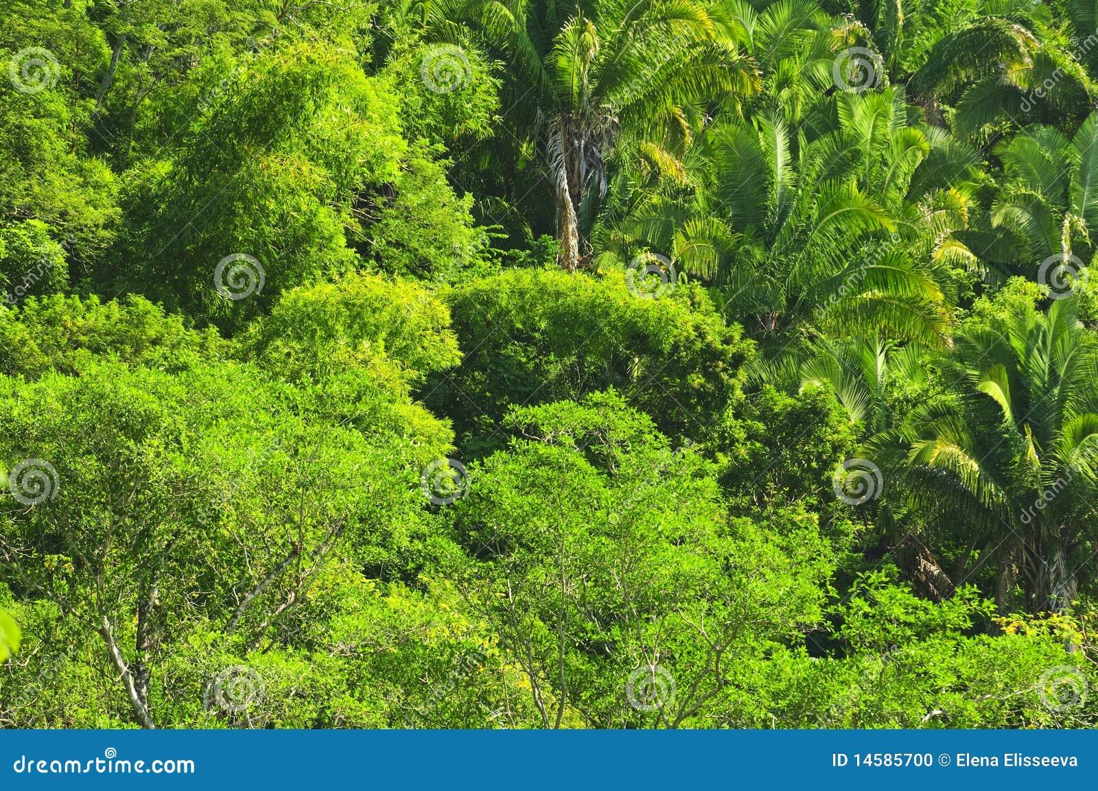 Fundo tropical da selva
