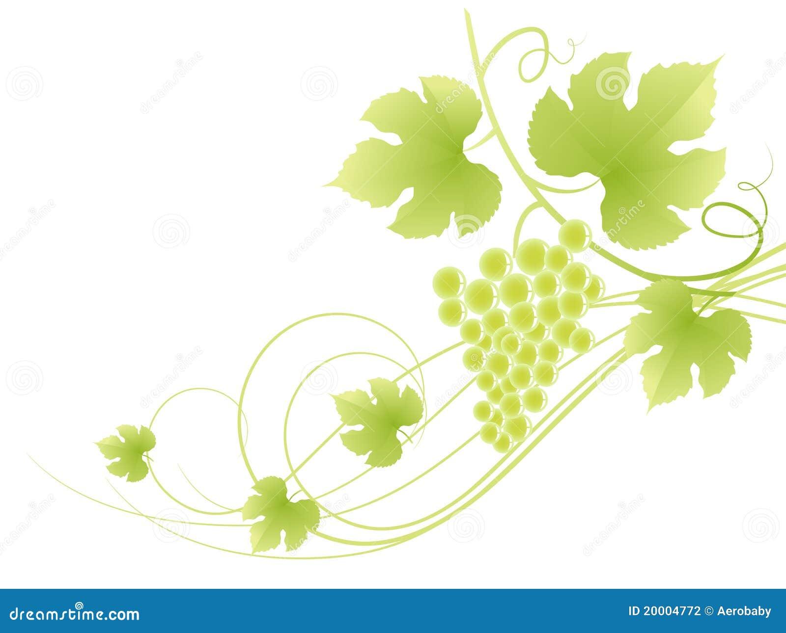 Fundo verde bonito da vinha.