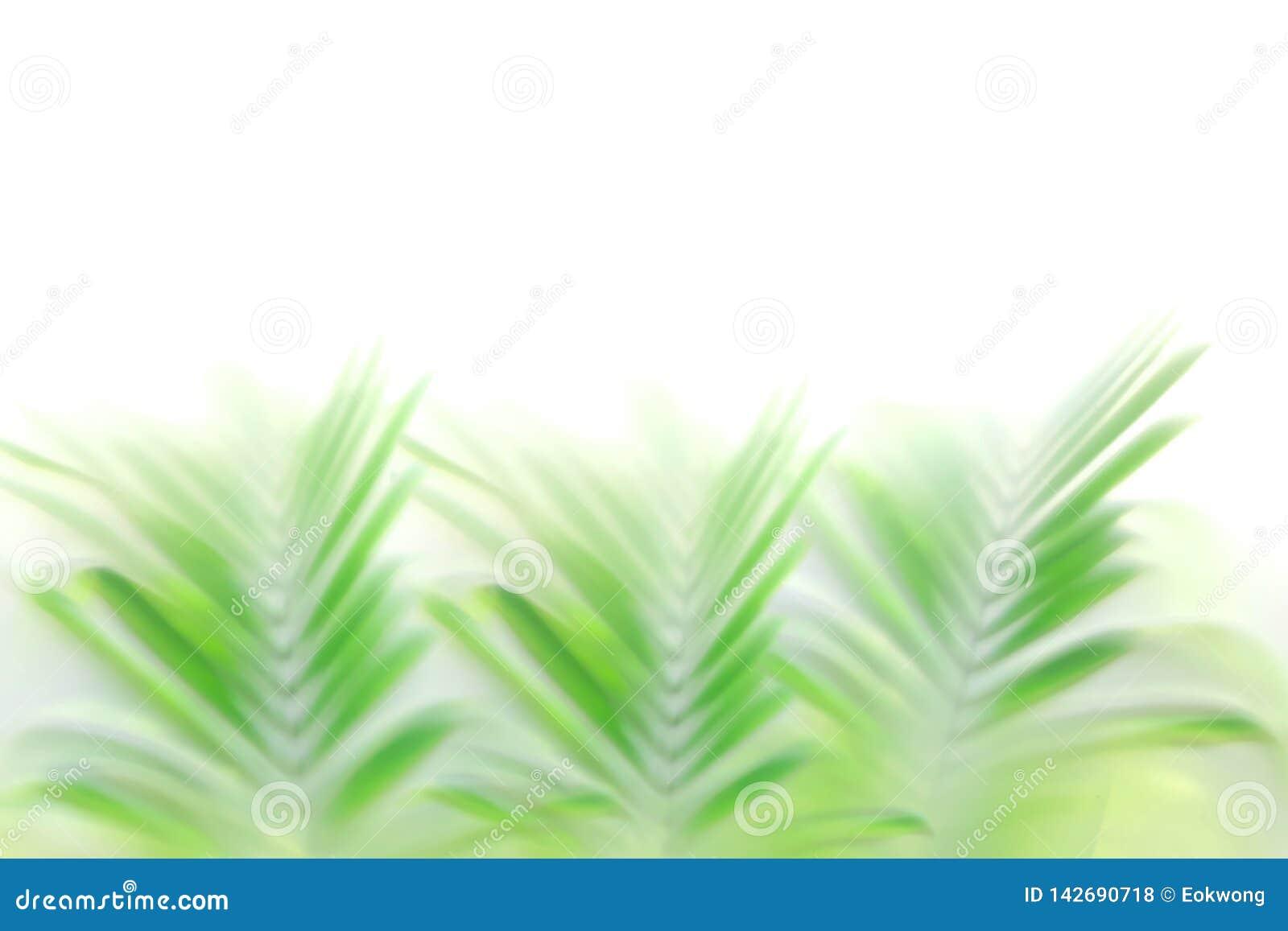Fundo verde borrado do efeito do bokeh das folhas de palmeira, contexto tropical bonito da natureza