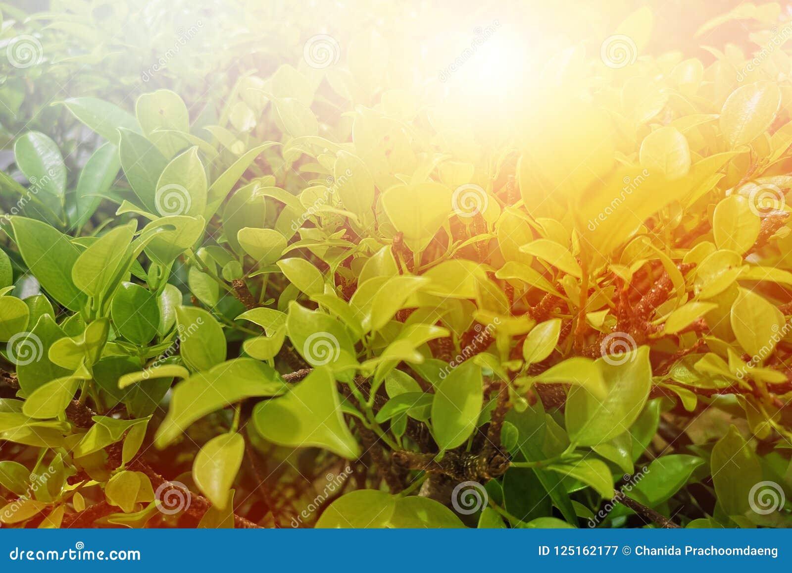 Fundo verde-claro claro da folha da manhã e espaço vazio para o texto ecb4a5c991