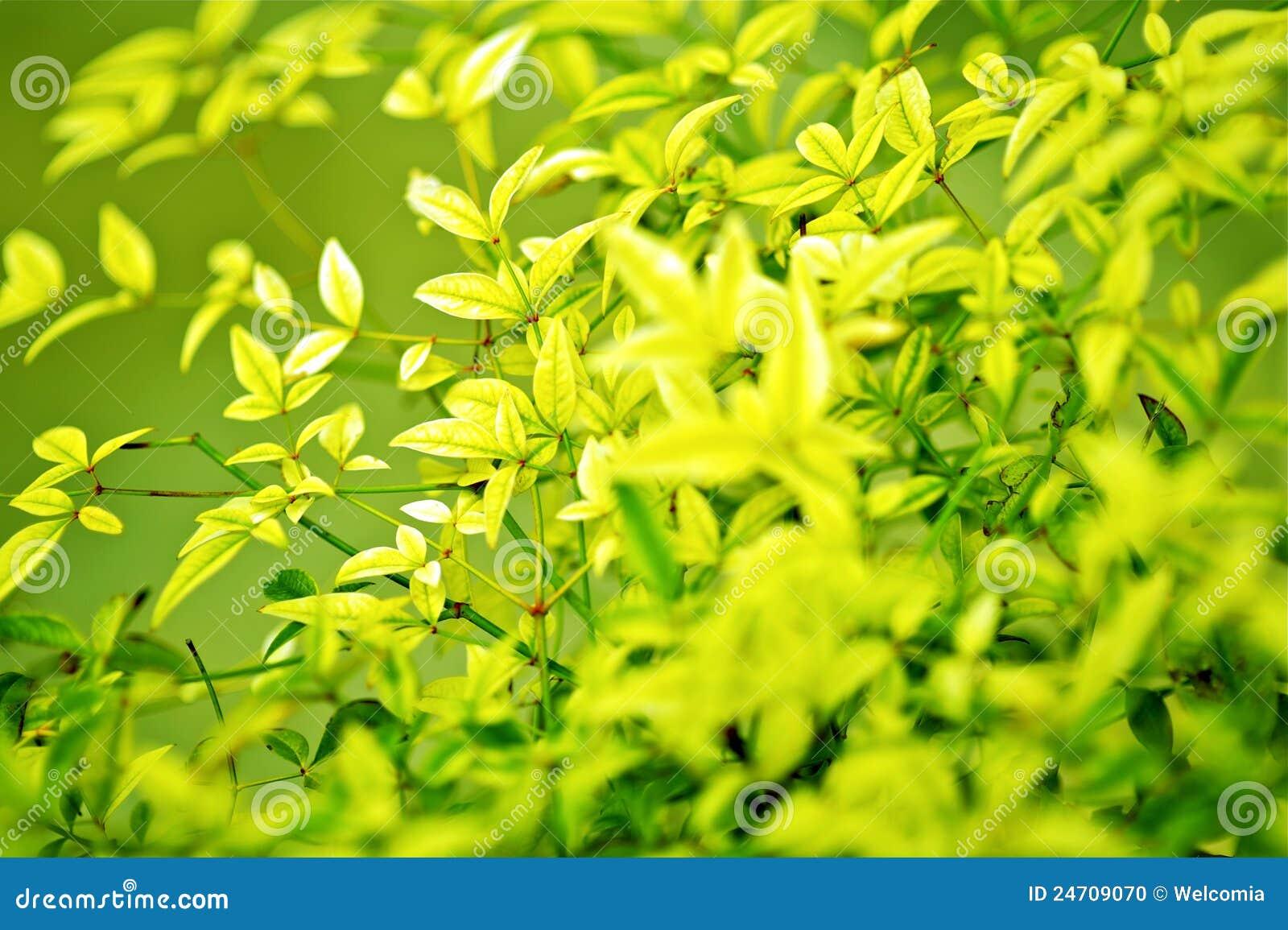 Fundo verde de Leafes