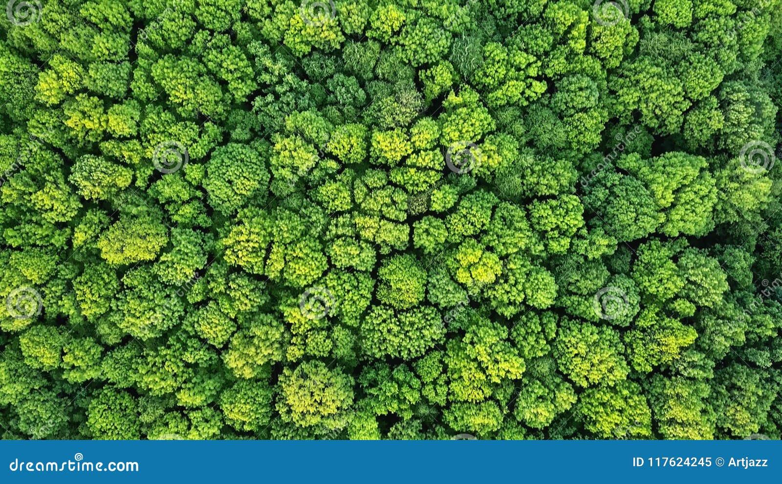 Fundo verde natural da floresta da mola da vista aérea Foto do zangão