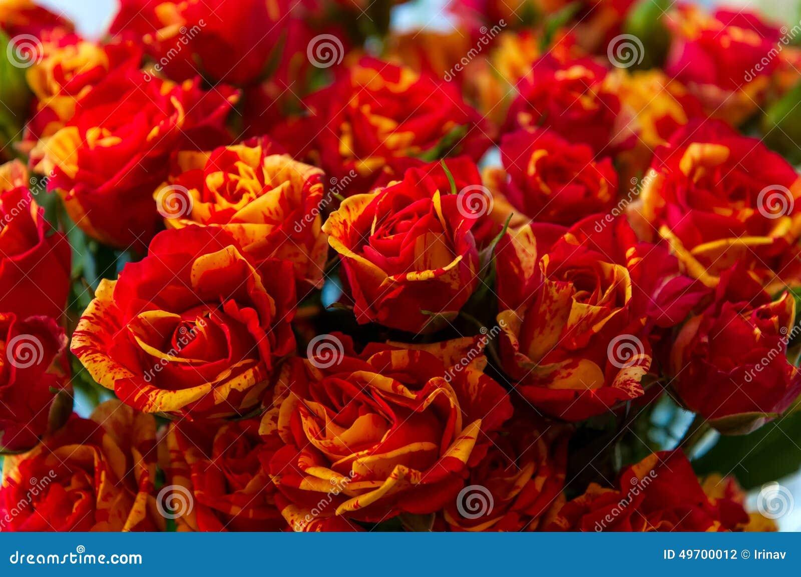 Fundo Vermelho Das Rosas Amarelas Foto De Stock Imagem De