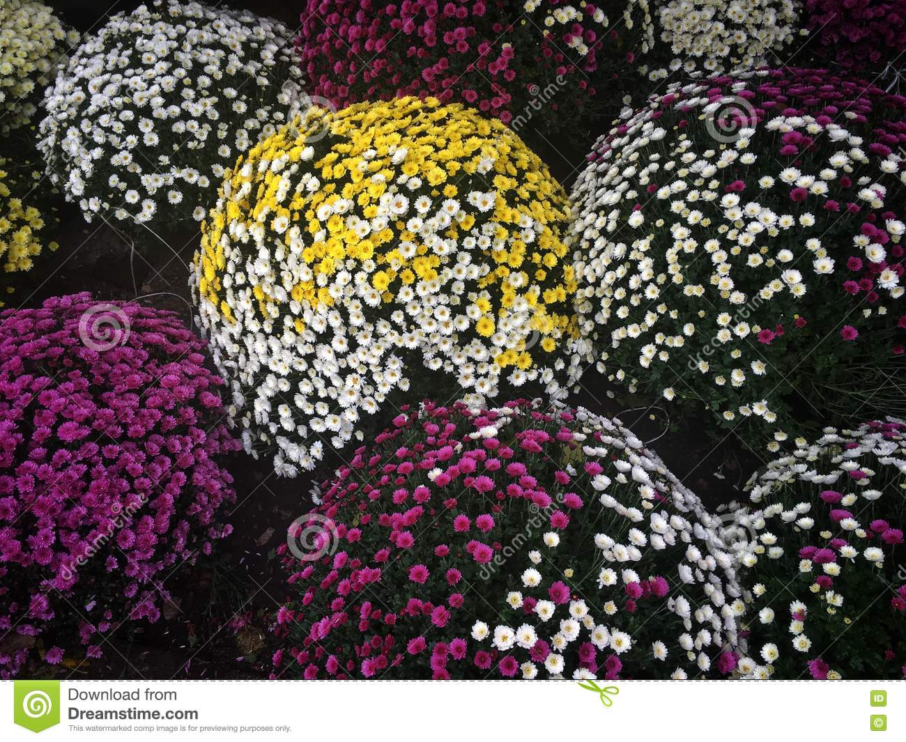 Funeral flowers stock image image of poland warsaw 81980751 download funeral flowers stock image image of poland warsaw 81980751 izmirmasajfo