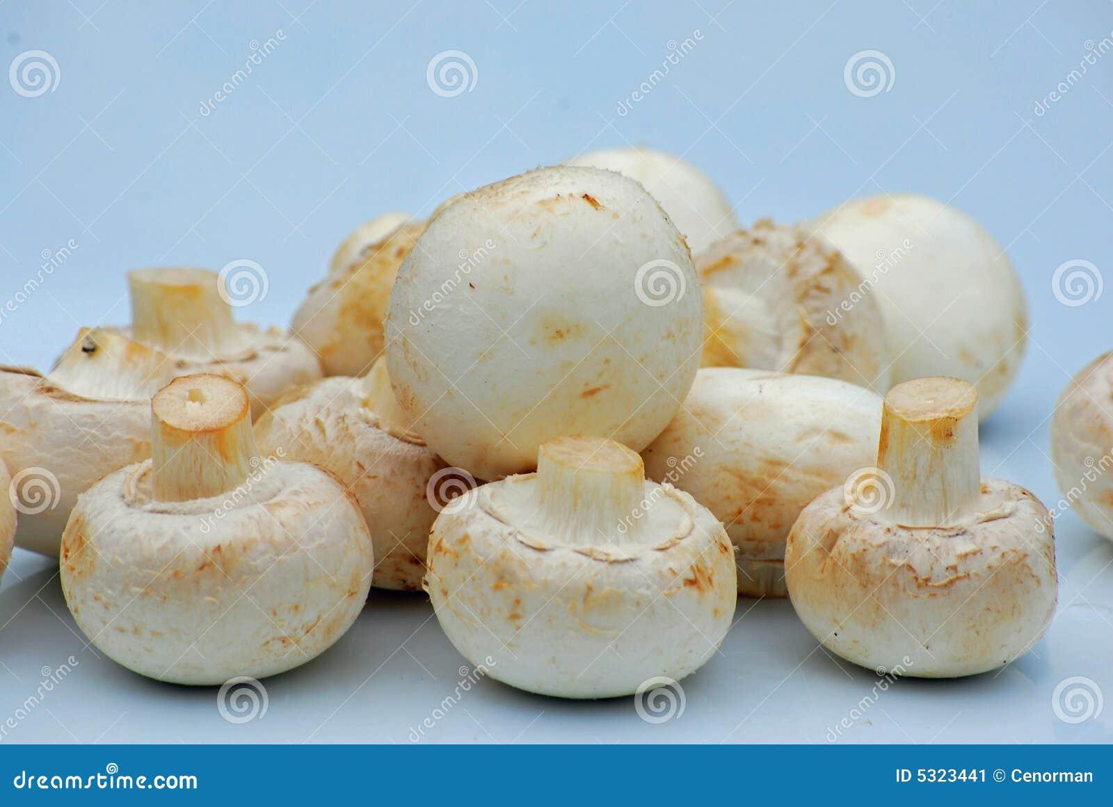 Download Funghi immagine stock. Immagine di mangi, pranzo, cuoco - 5323441