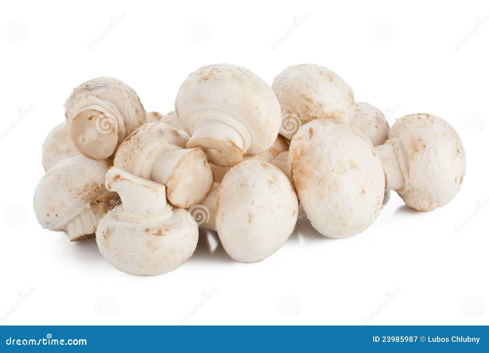Funghi bianchi