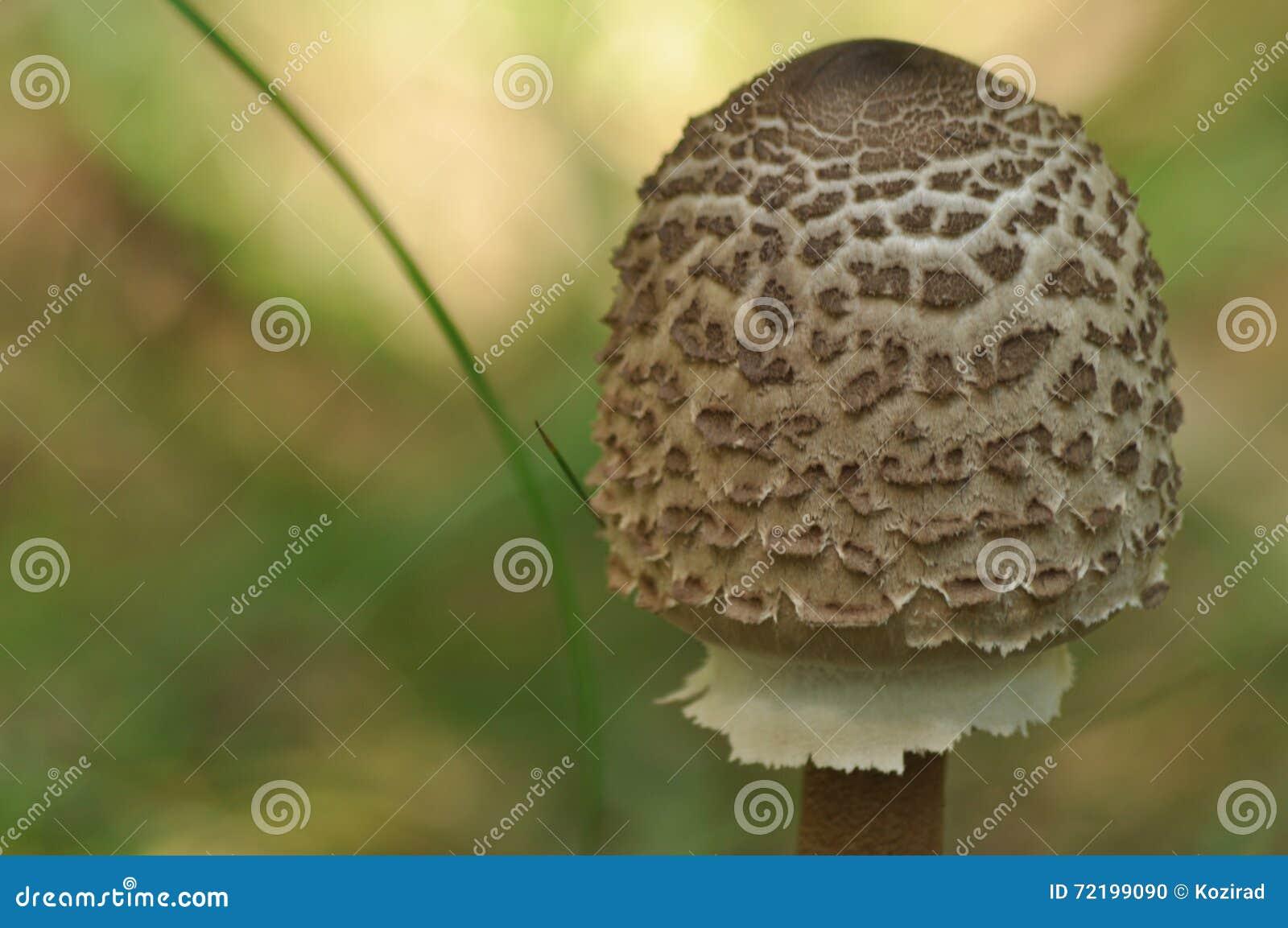 Funghi commestibili squisitezza L aggiunta ai piatti Autunno