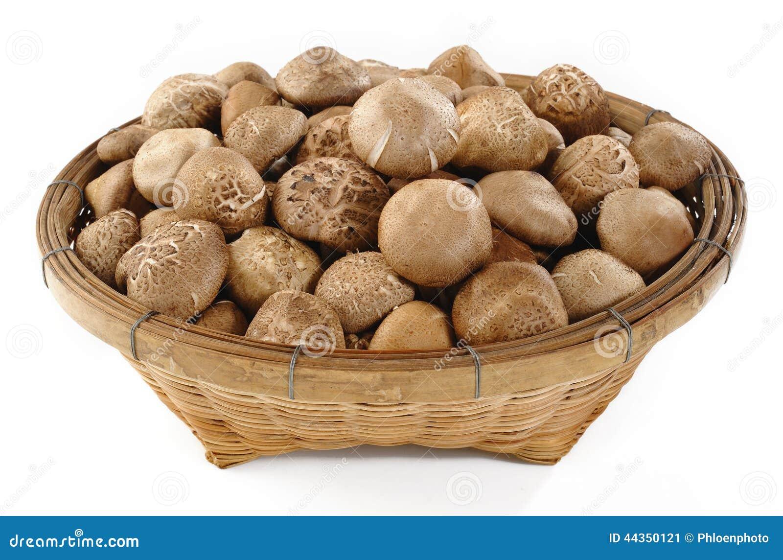 Funghi di shiitake crudi