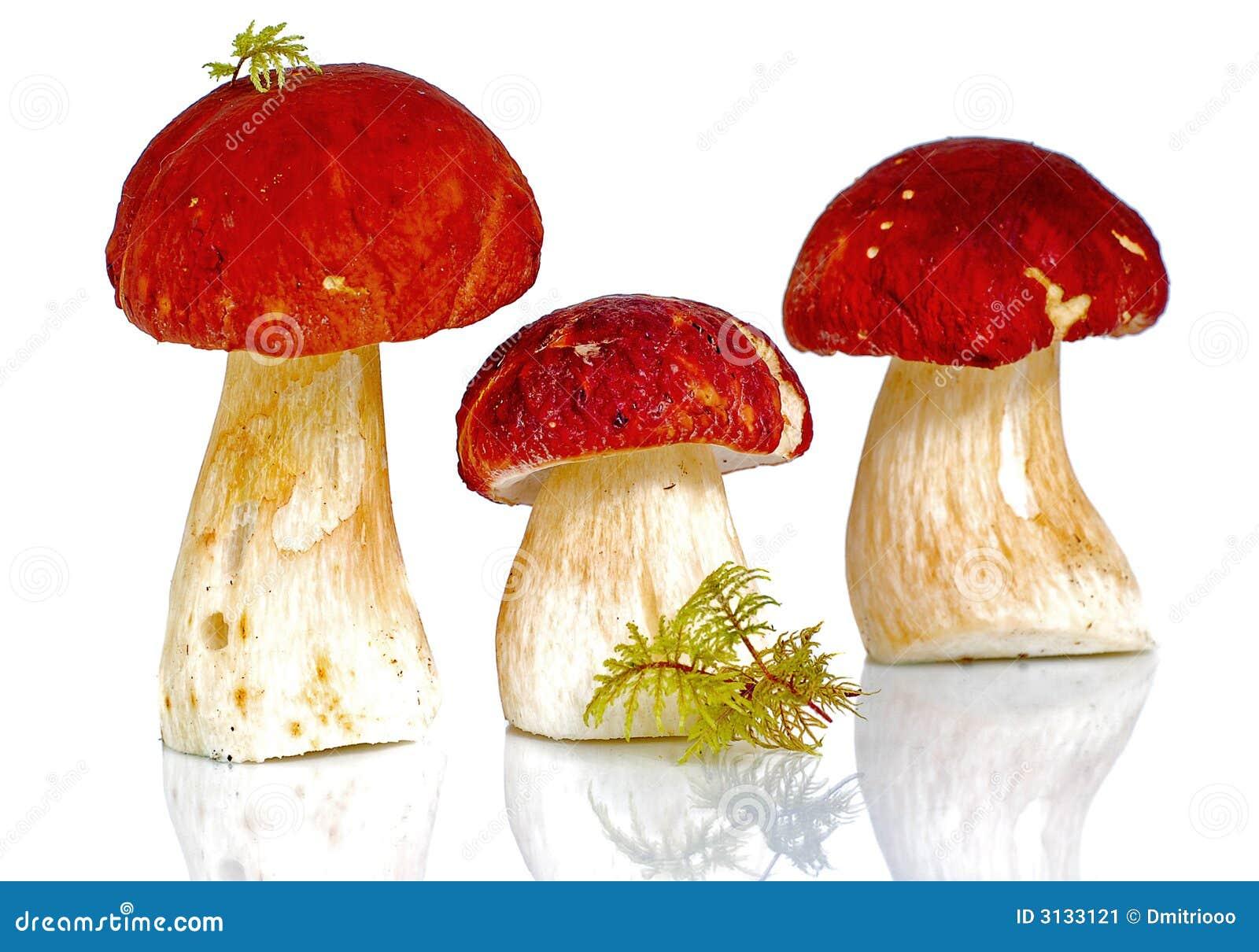 Funghi ricoperti rossi