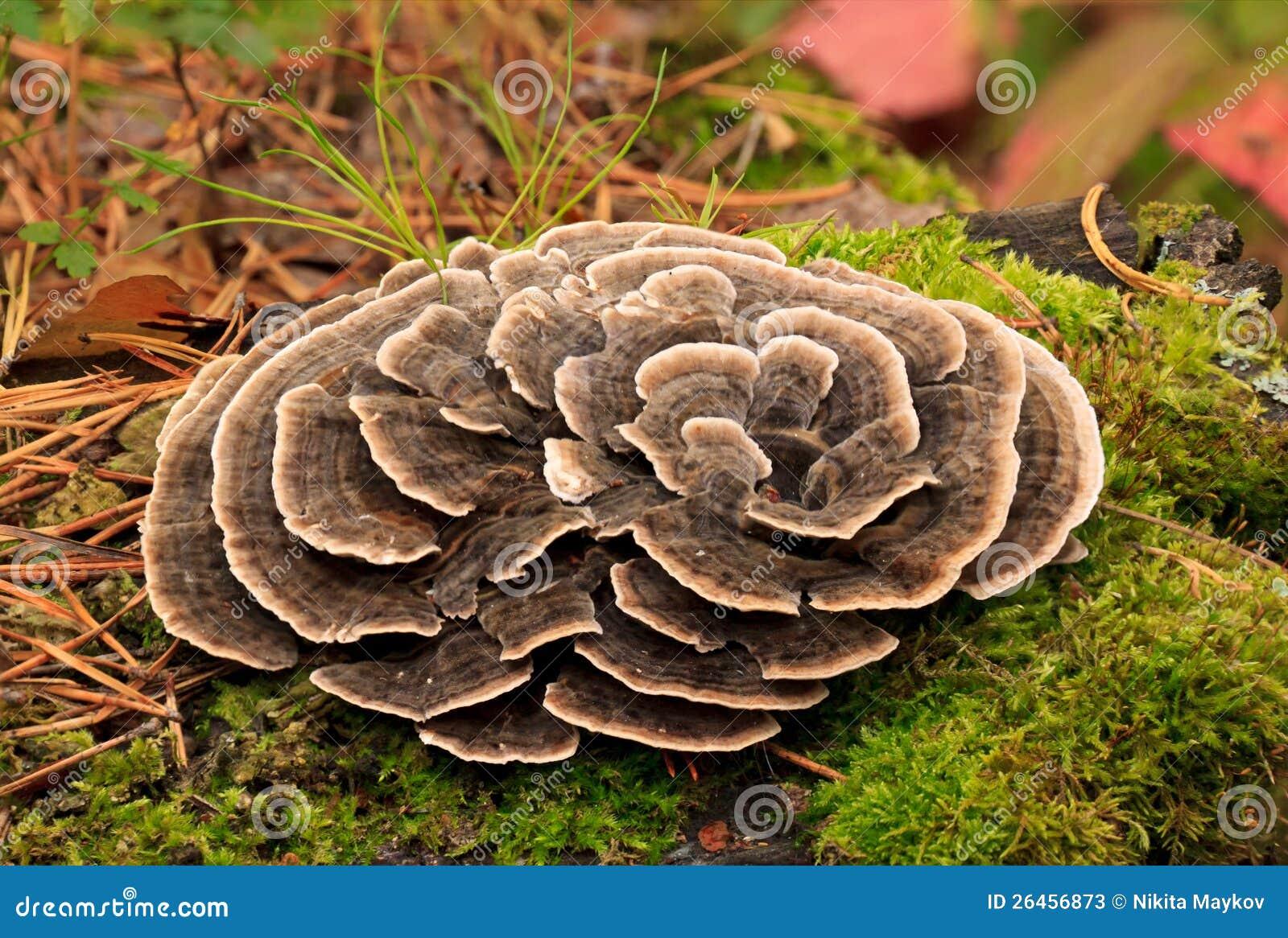 Funghi tossici.