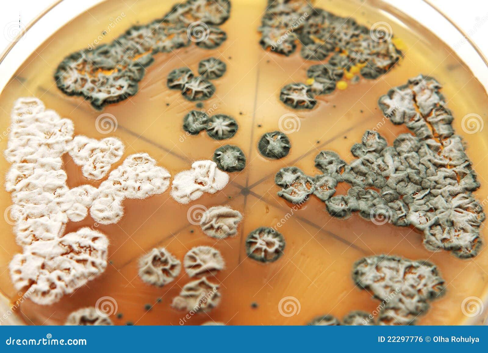 Fungi on agar