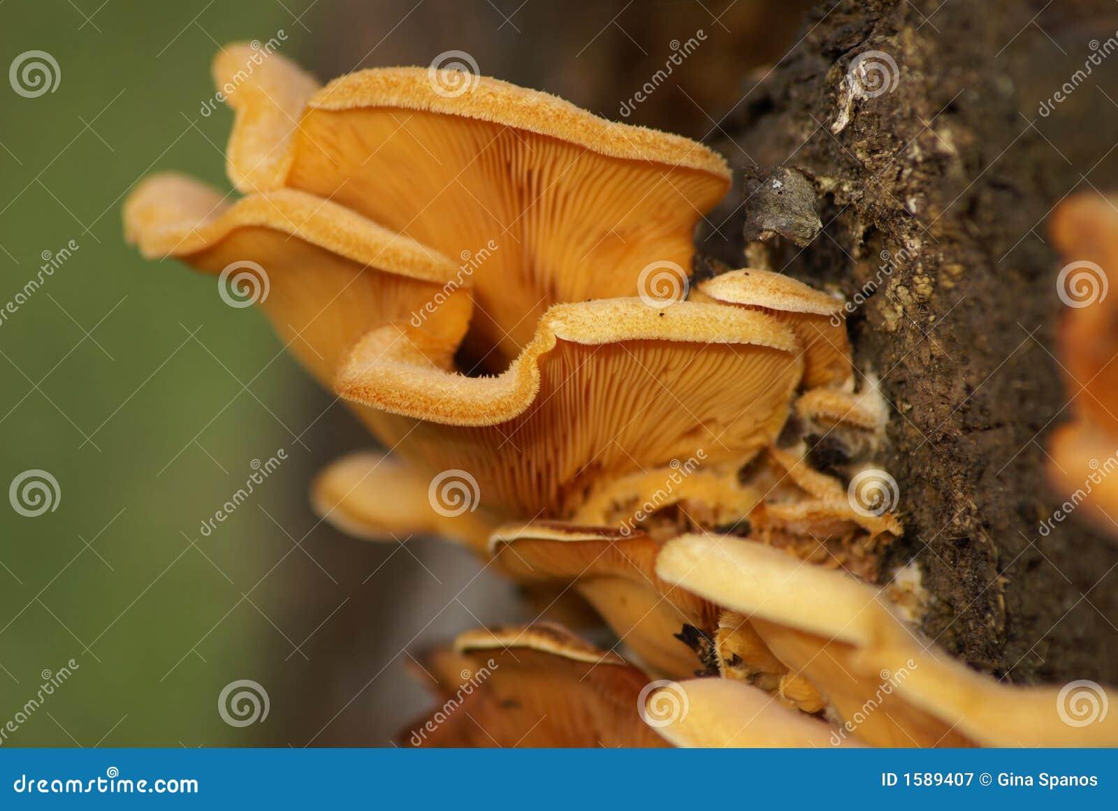 Trattamento di un fungo tra dita del piede di unguento