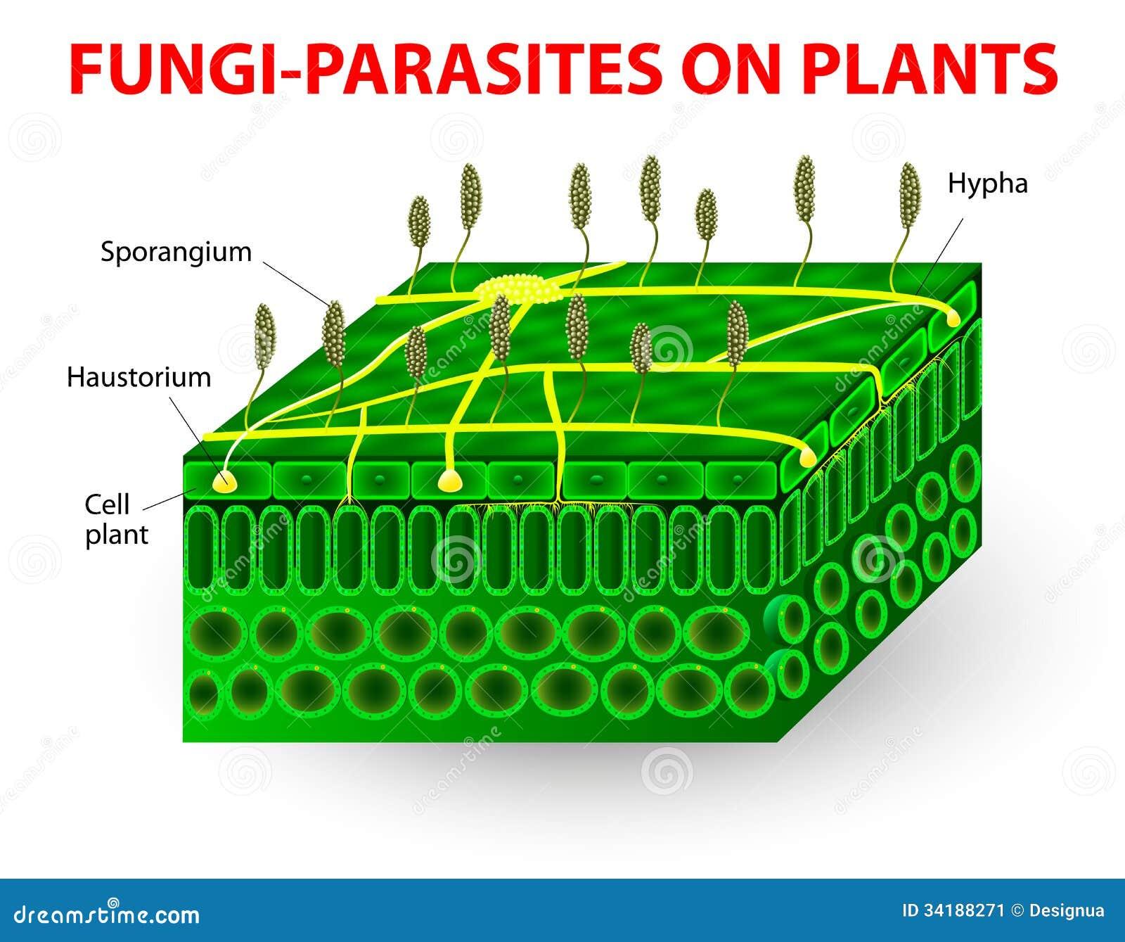 Fungo-parassiti sulle piante