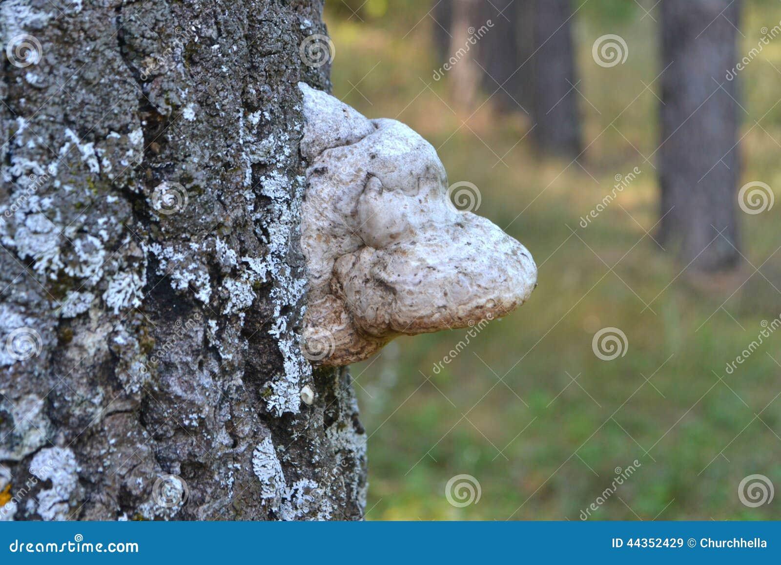 Fungo su un albero