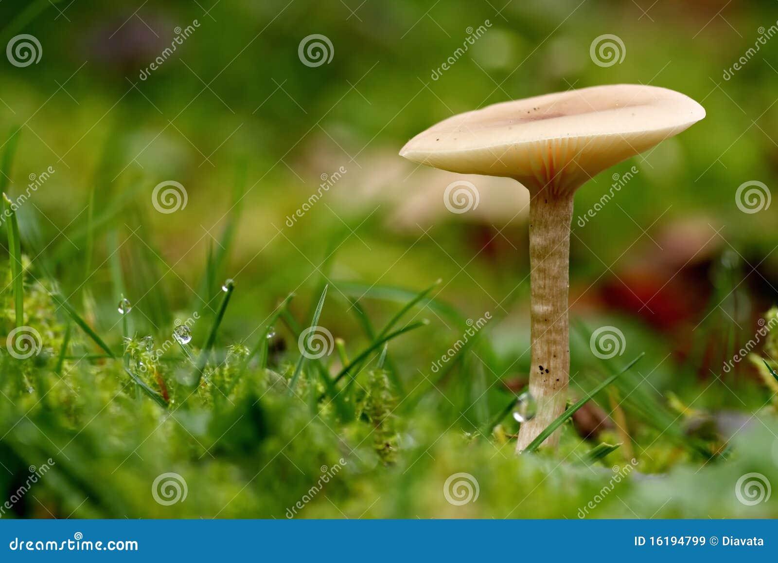 Unguento eficaz de um fungo de pele