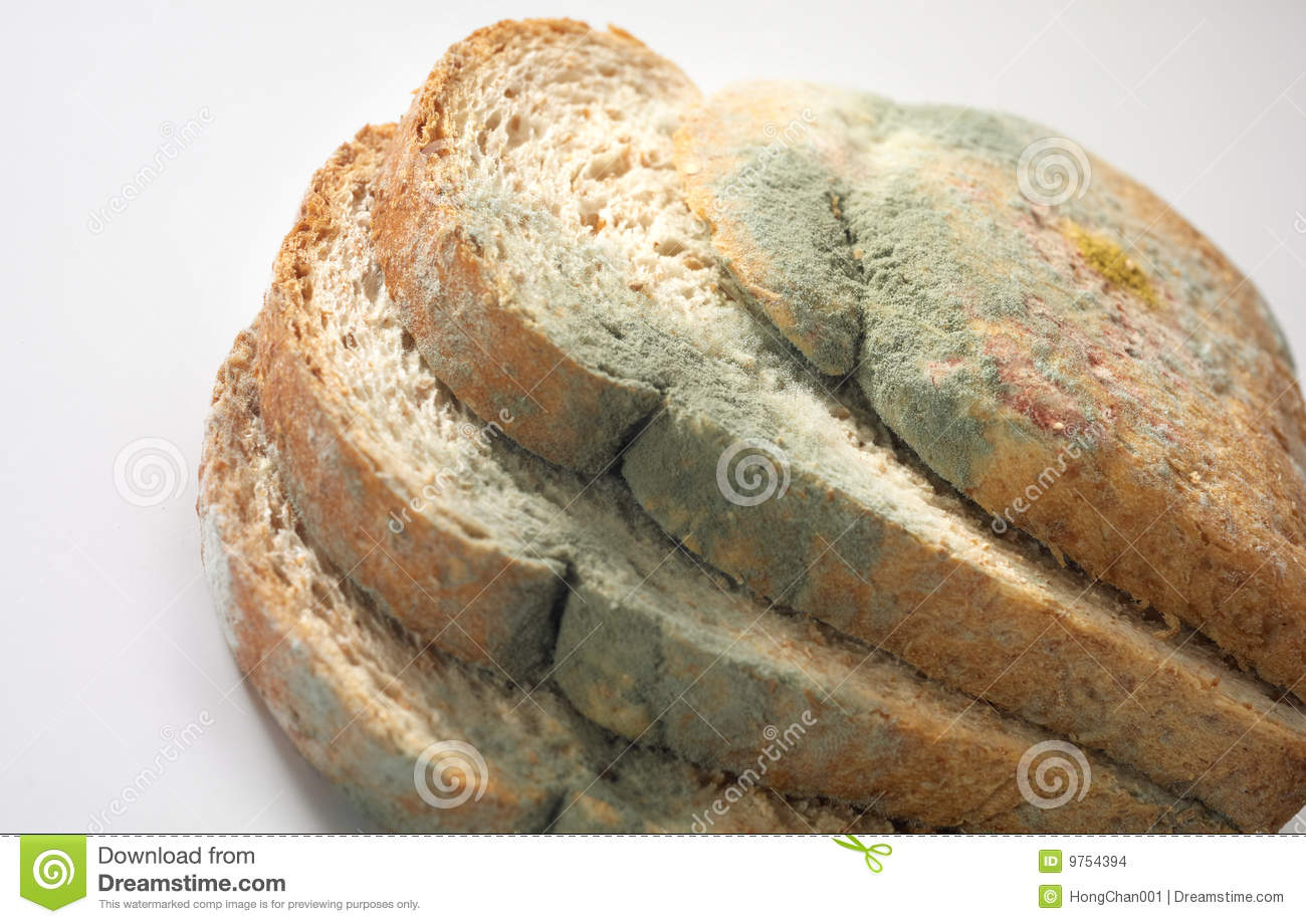 Fungus On Bread Stock Images - Image: 9754394