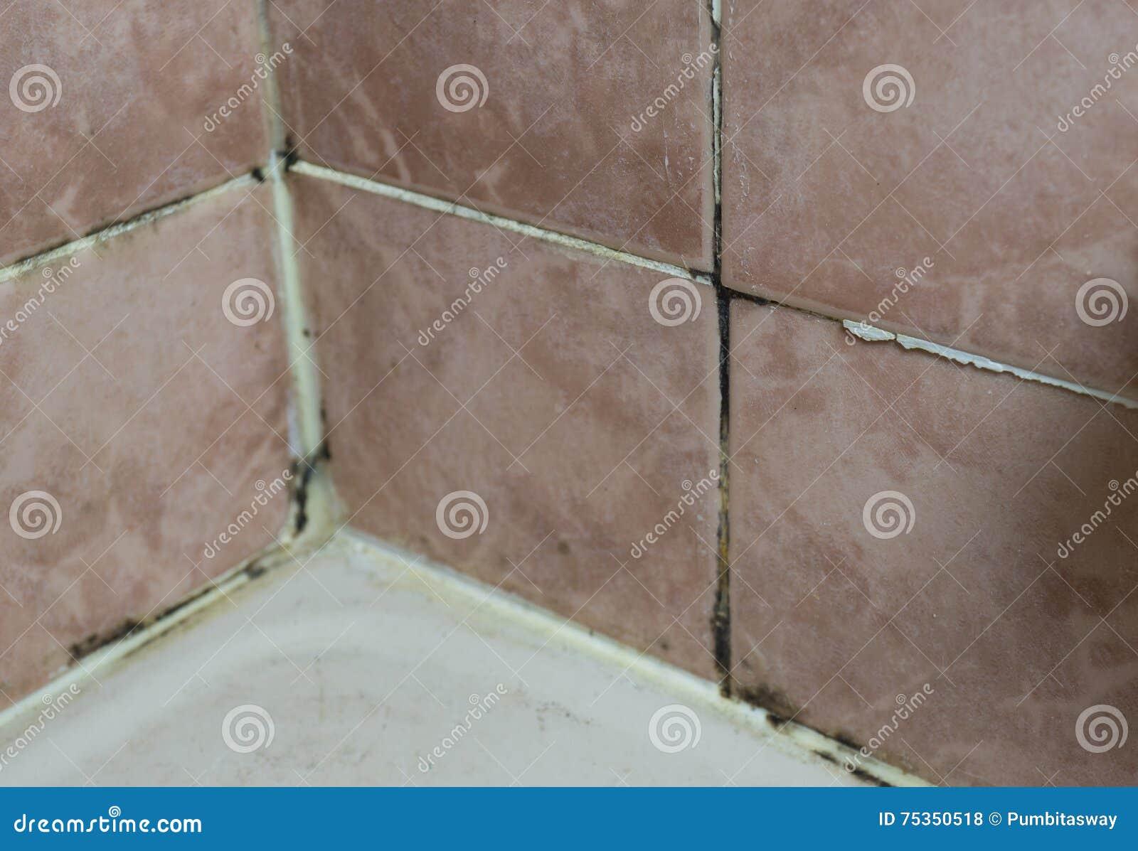 Fungus growing on tile joints bathroom wall corner stock photo royalty free stock photo download fungus growing on tile dailygadgetfo Images