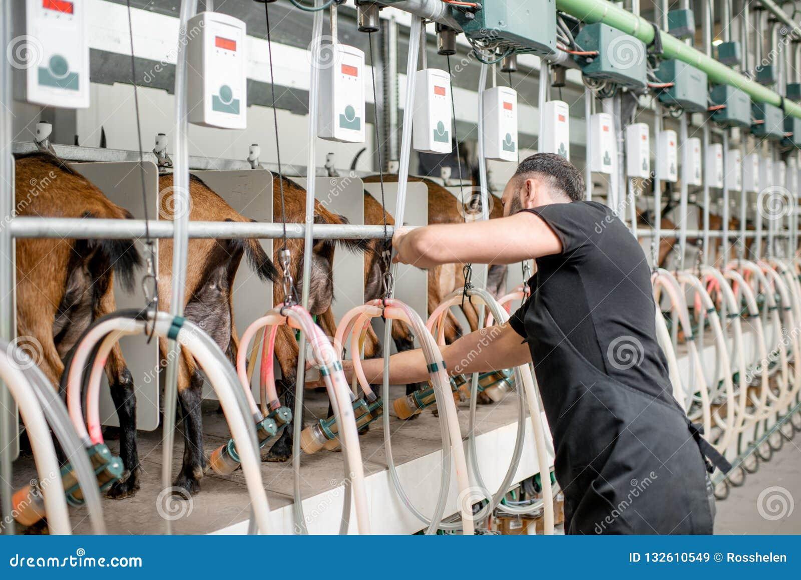 Mann melkmaschine für den China präsentiert: