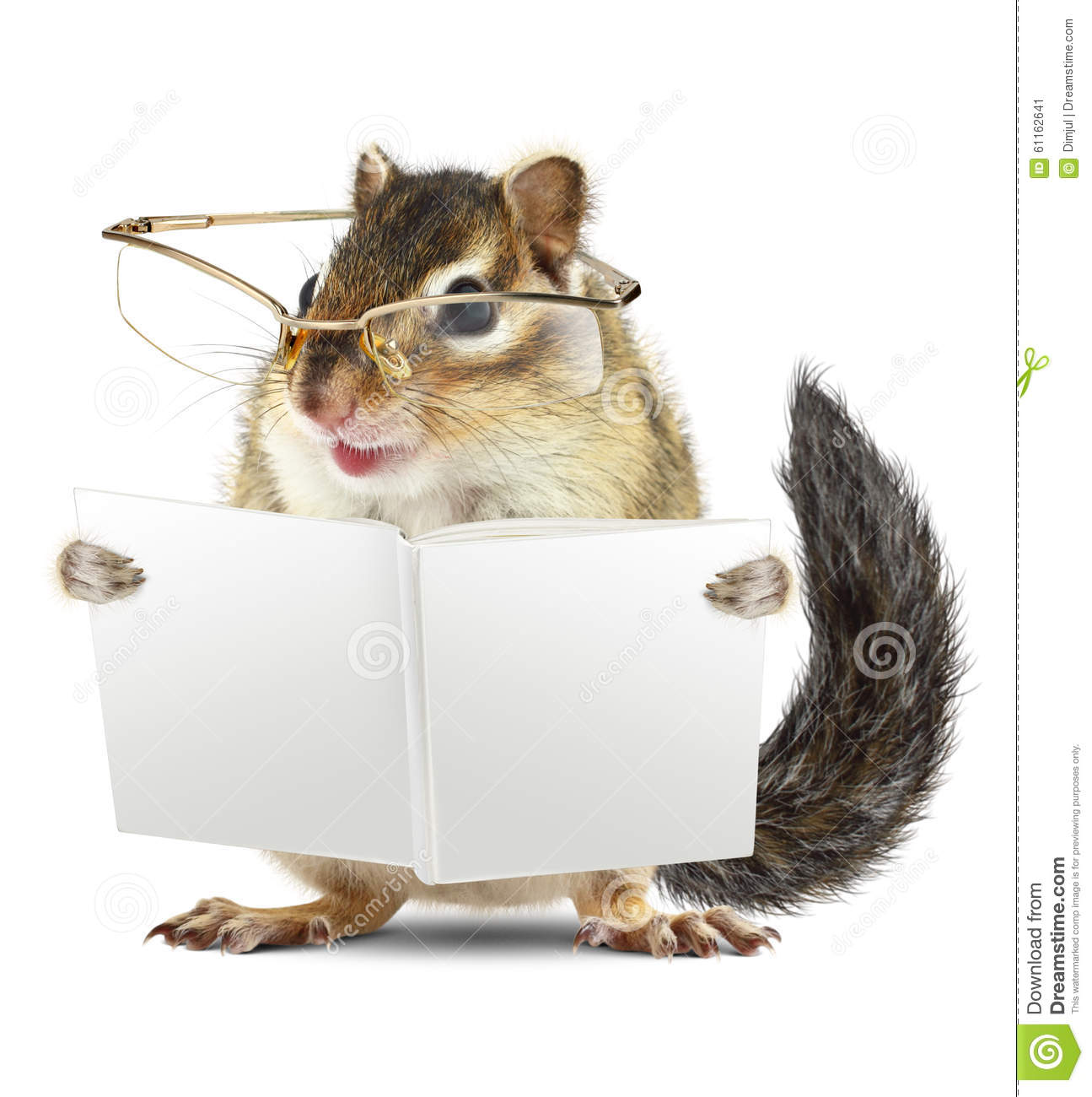 funny animal chipmunk with glasses reading book stock photo   image