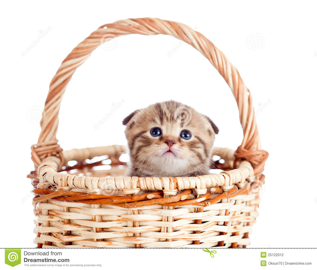 Cat Basket Clipart : Funny baby cat sitting in basket stock photography image