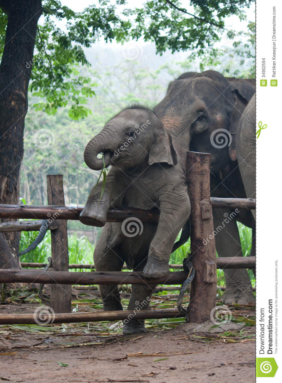 Funny Baby Thai Elephant Stock Images Image 34902594