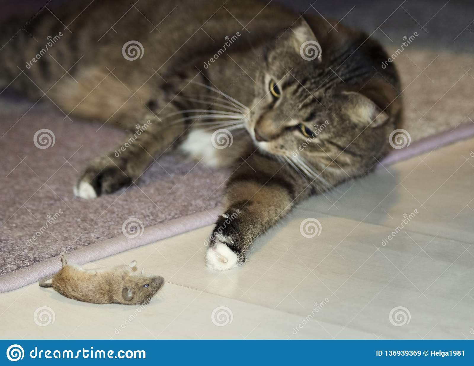 Funny beautiful cat playing with a mouse. Selective focus. Focus on mouse