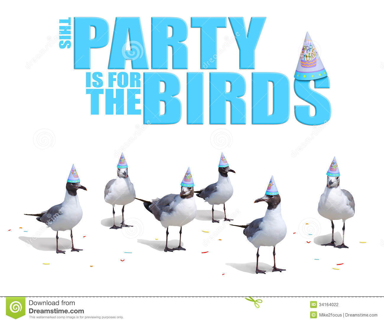 funny birds wearing birthday party hats card stock photography   image