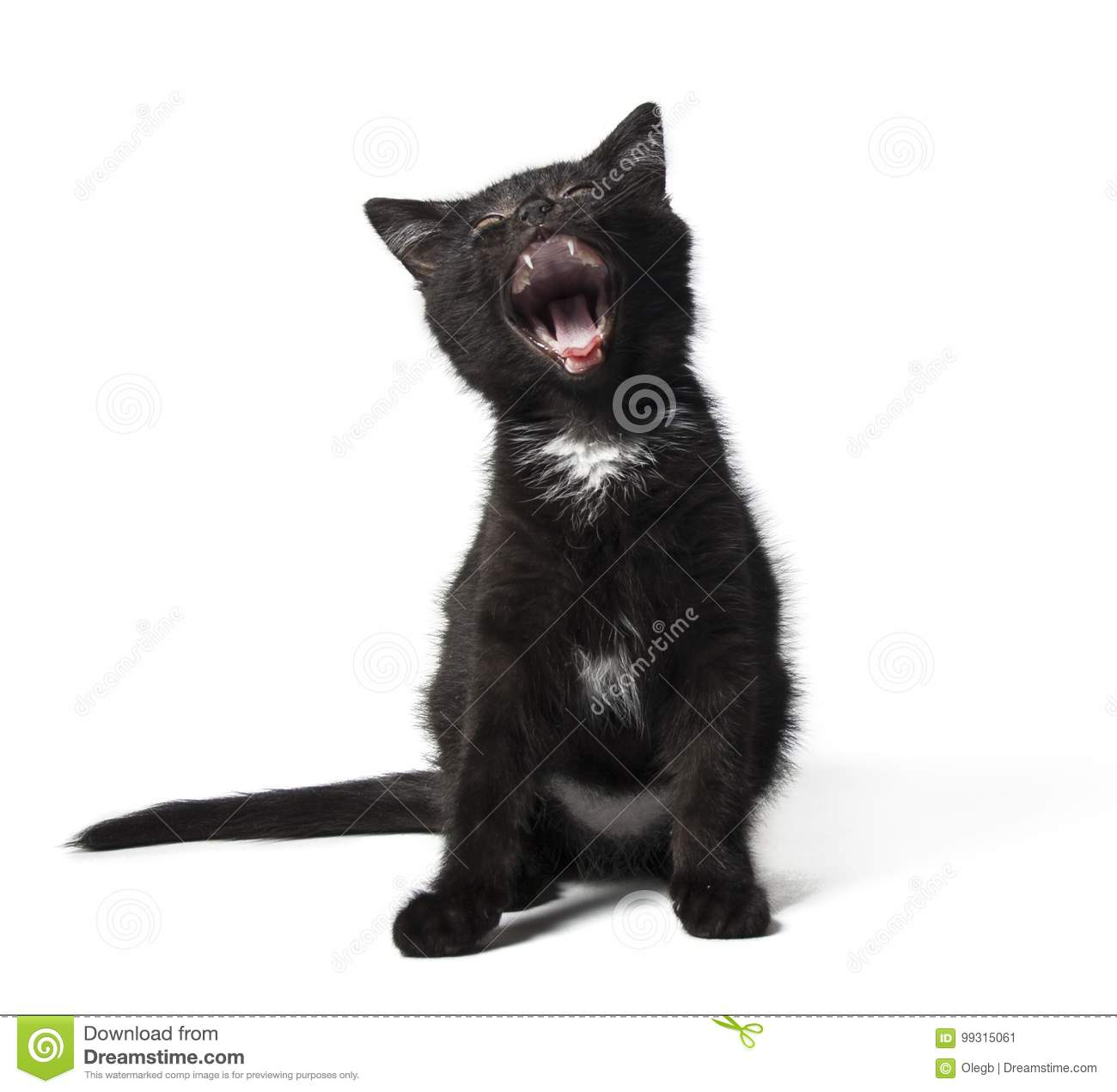 Funny Black Cat Yawning Stock Image Image Of Humor Mouth 99315061